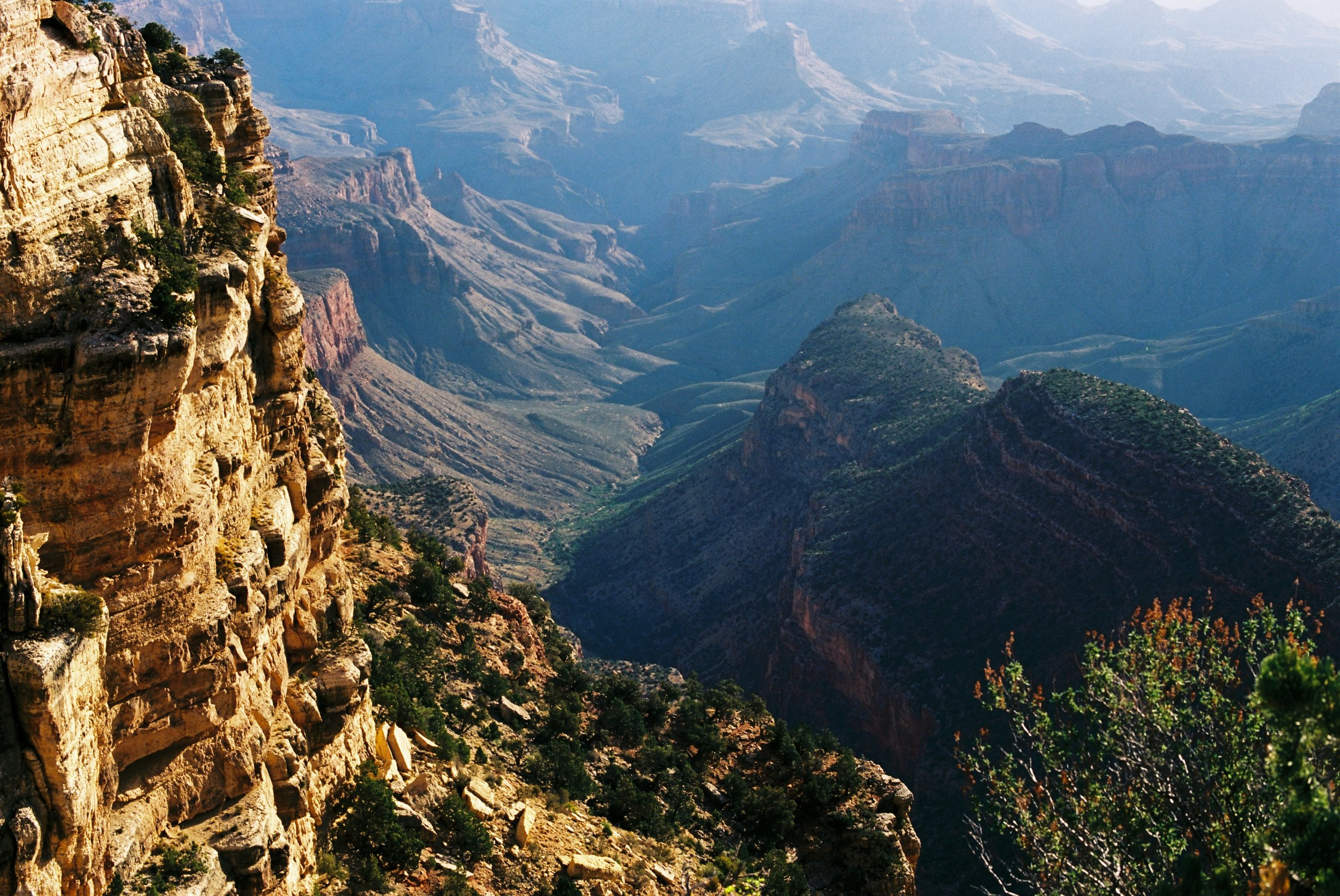 Is that a rain forest at the Grand Canyon? Sure looks like it.