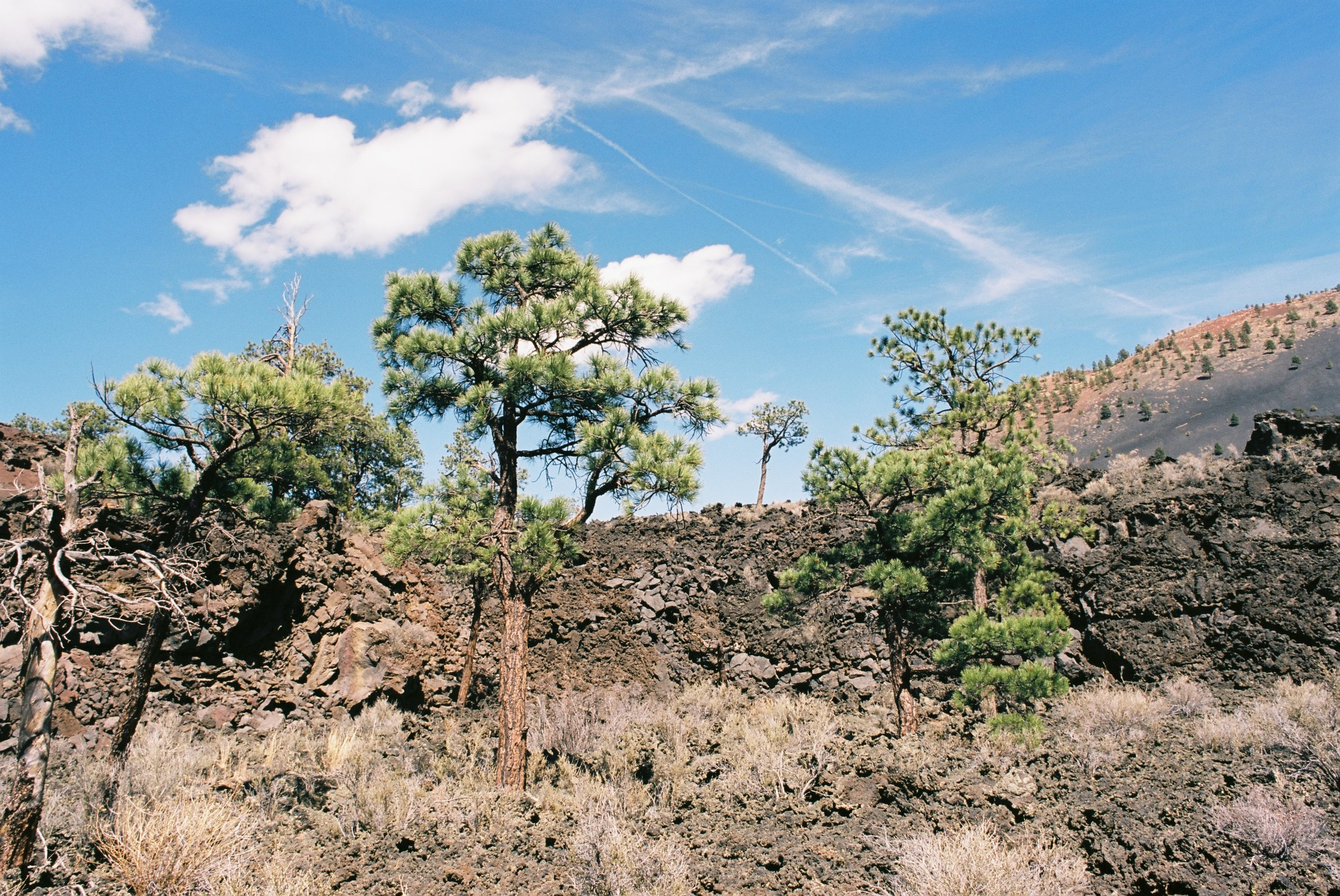 Trees growing out of leftover crater and volcano debris