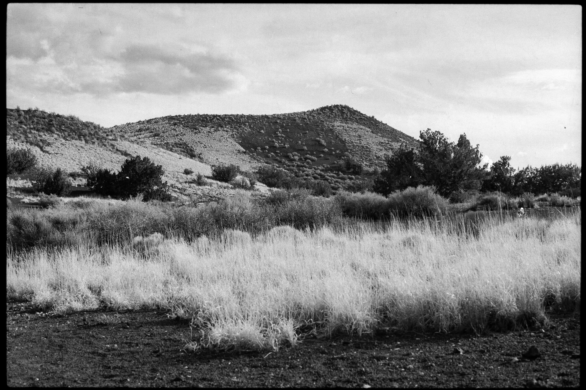 Vegetation along the base of Doney Mountain