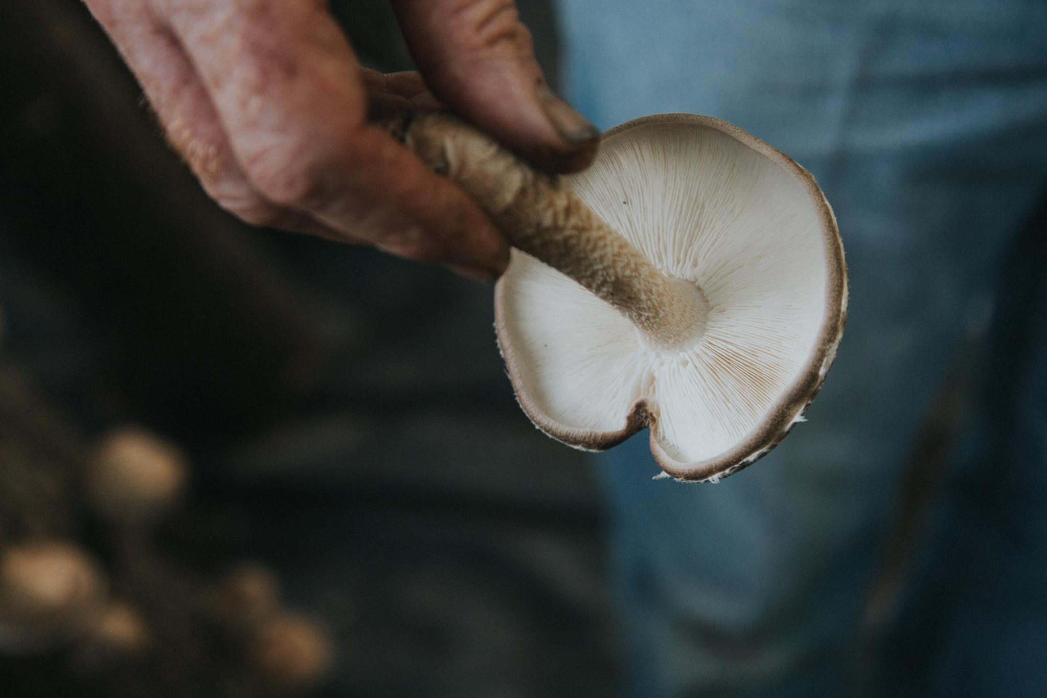 SG6-Mushroom-Farm-Olivia-Siegel-8.jpg