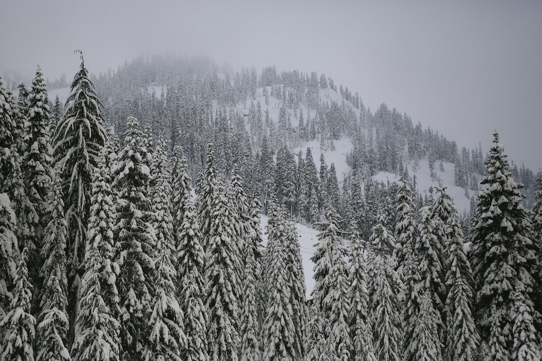 a-bird-of-passage-snowy-moutain