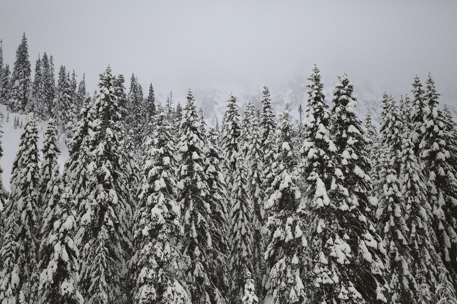a-bird-of-passage-snowy-trees