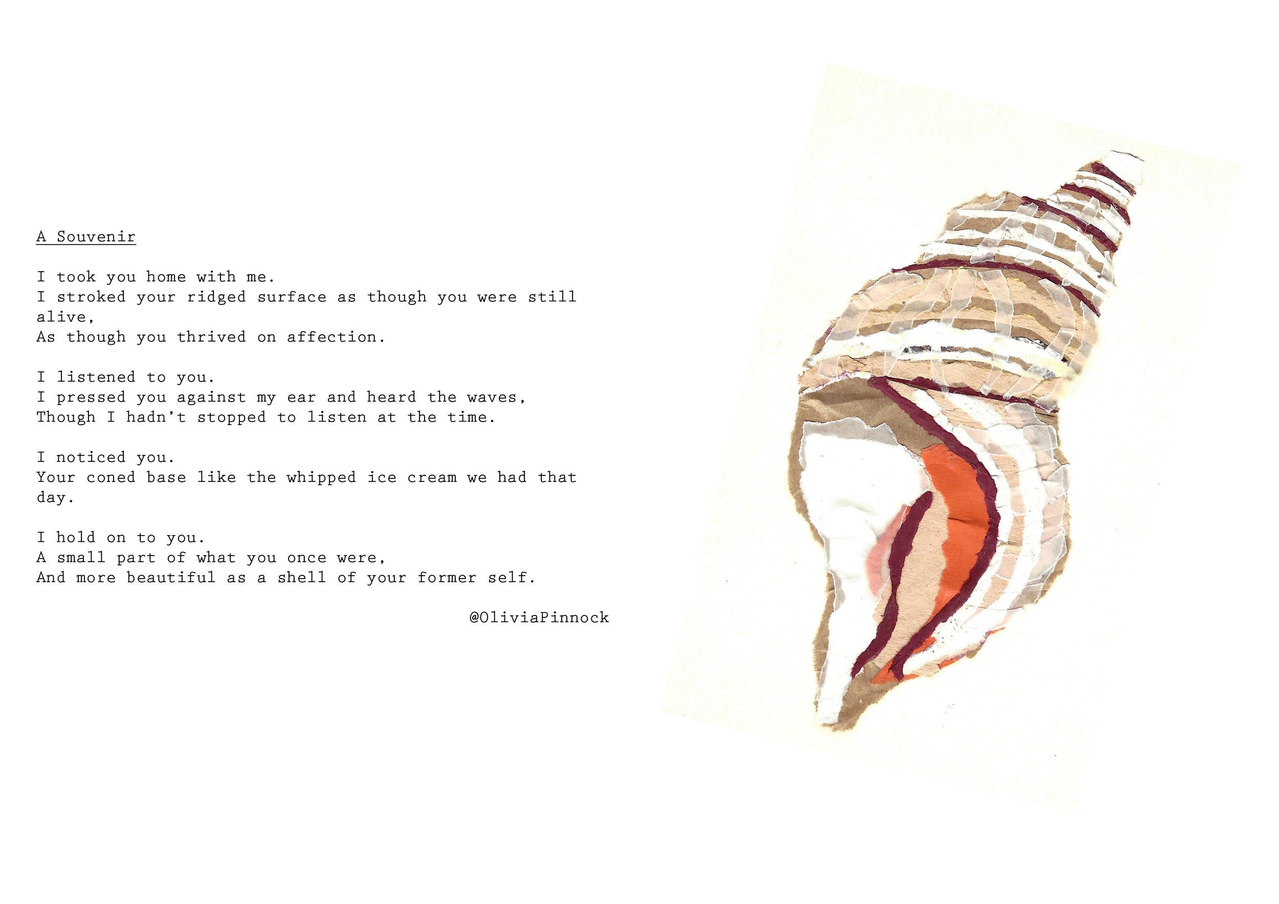 11 shell.jpg