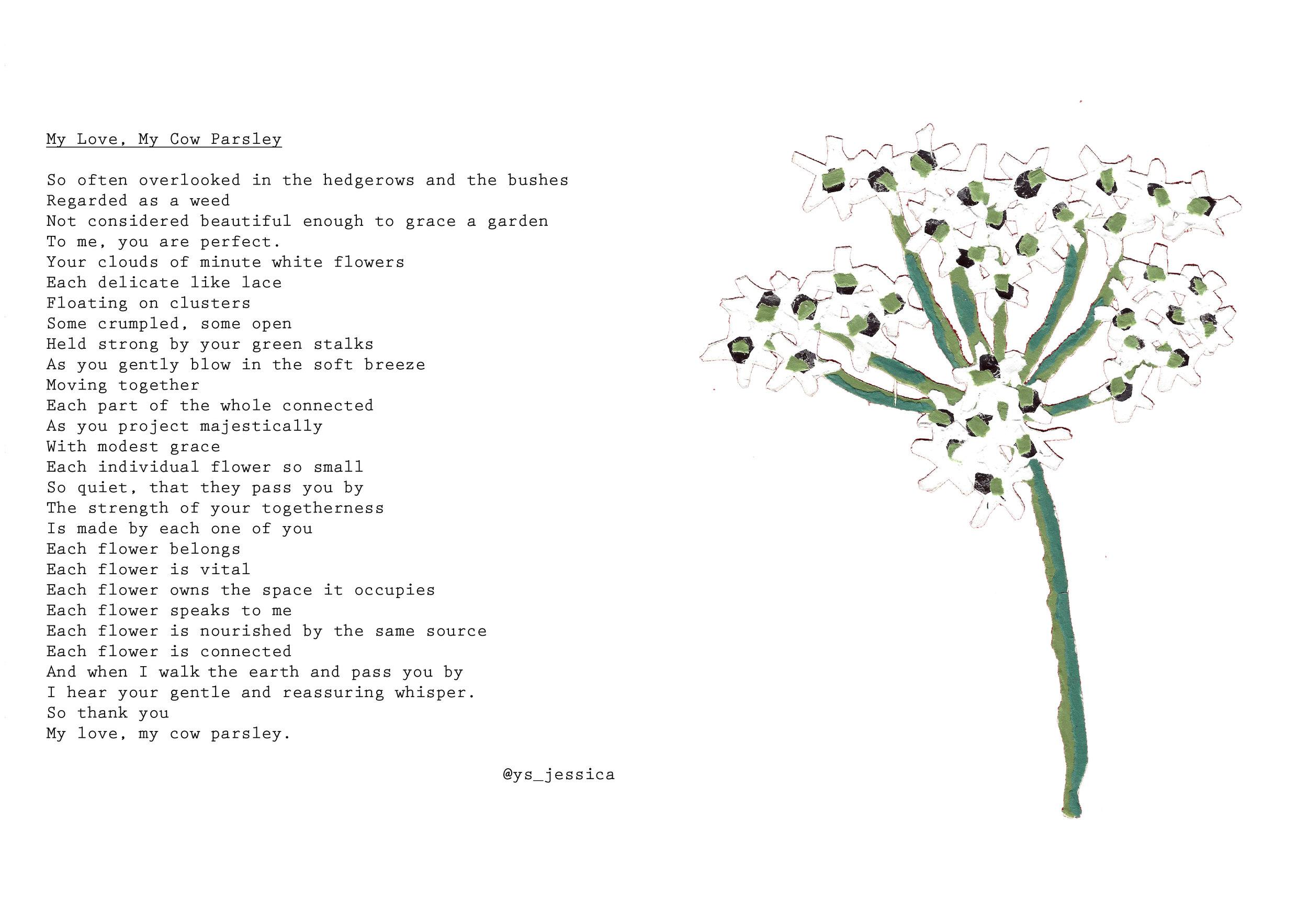 10 cow parsley.jpg