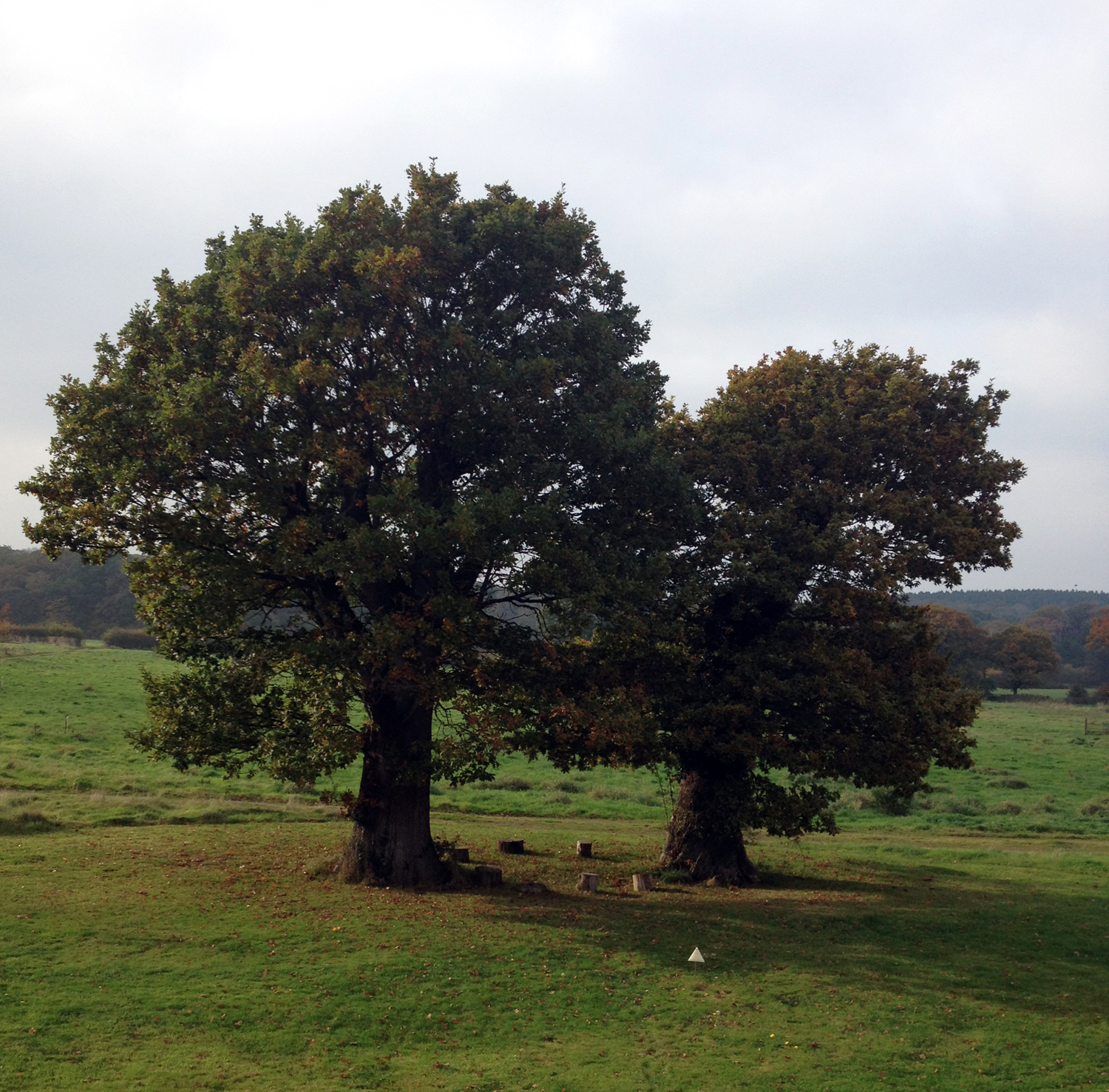 The majestic oak trees at 42 Acres