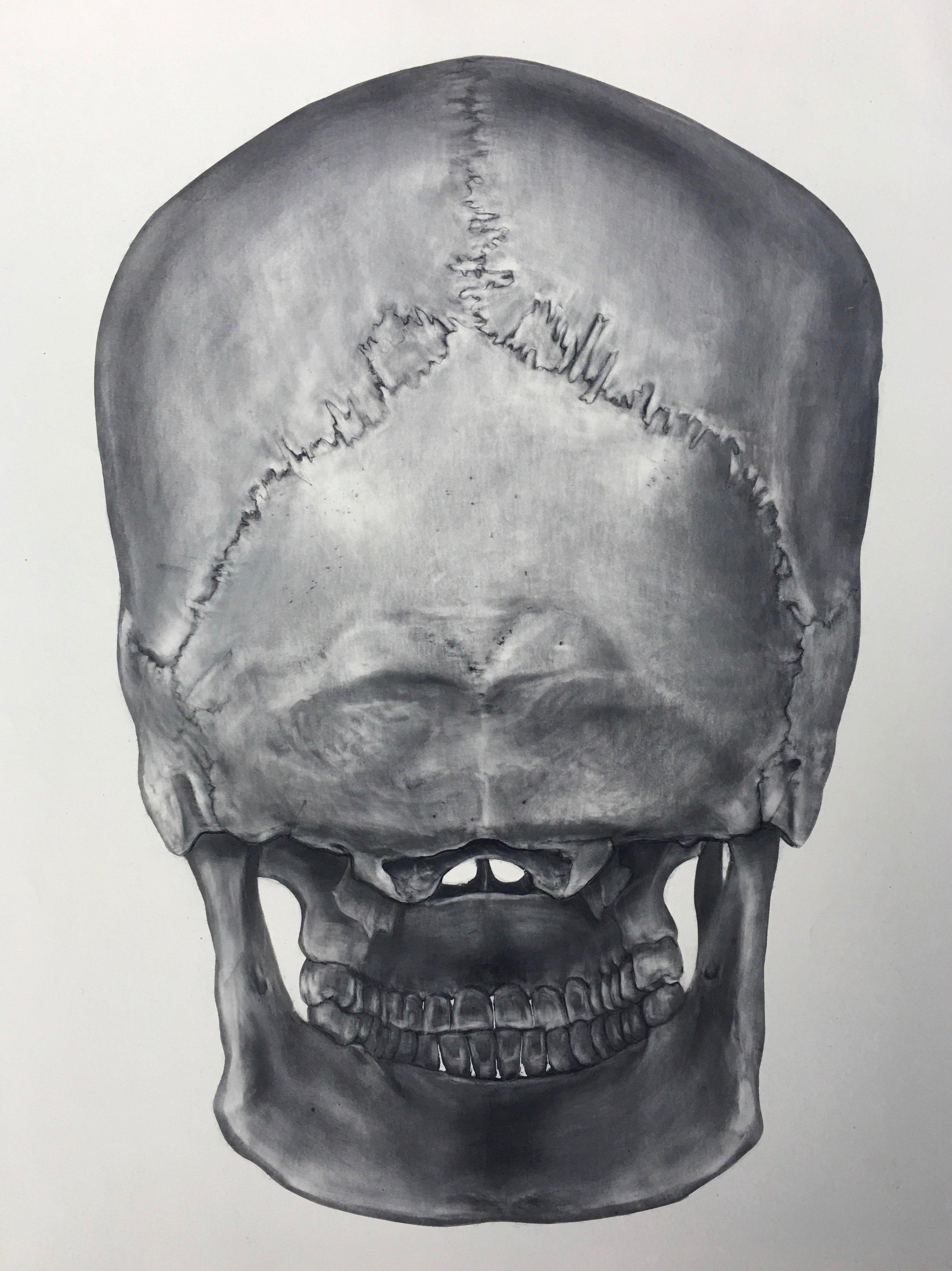 "Skull Drawings  Carbon Dust on claybord 10""x12"""