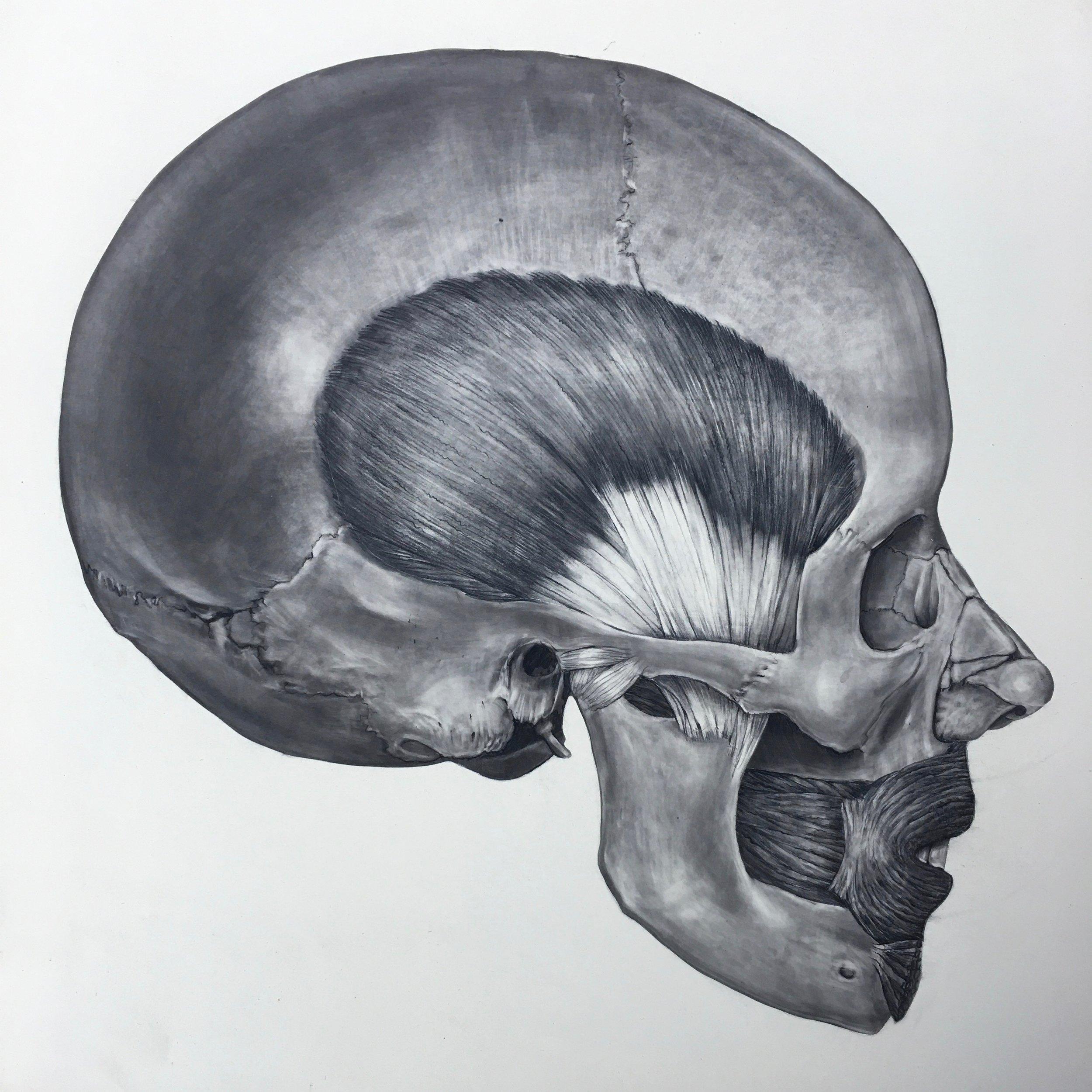 drawing-skull.jpg