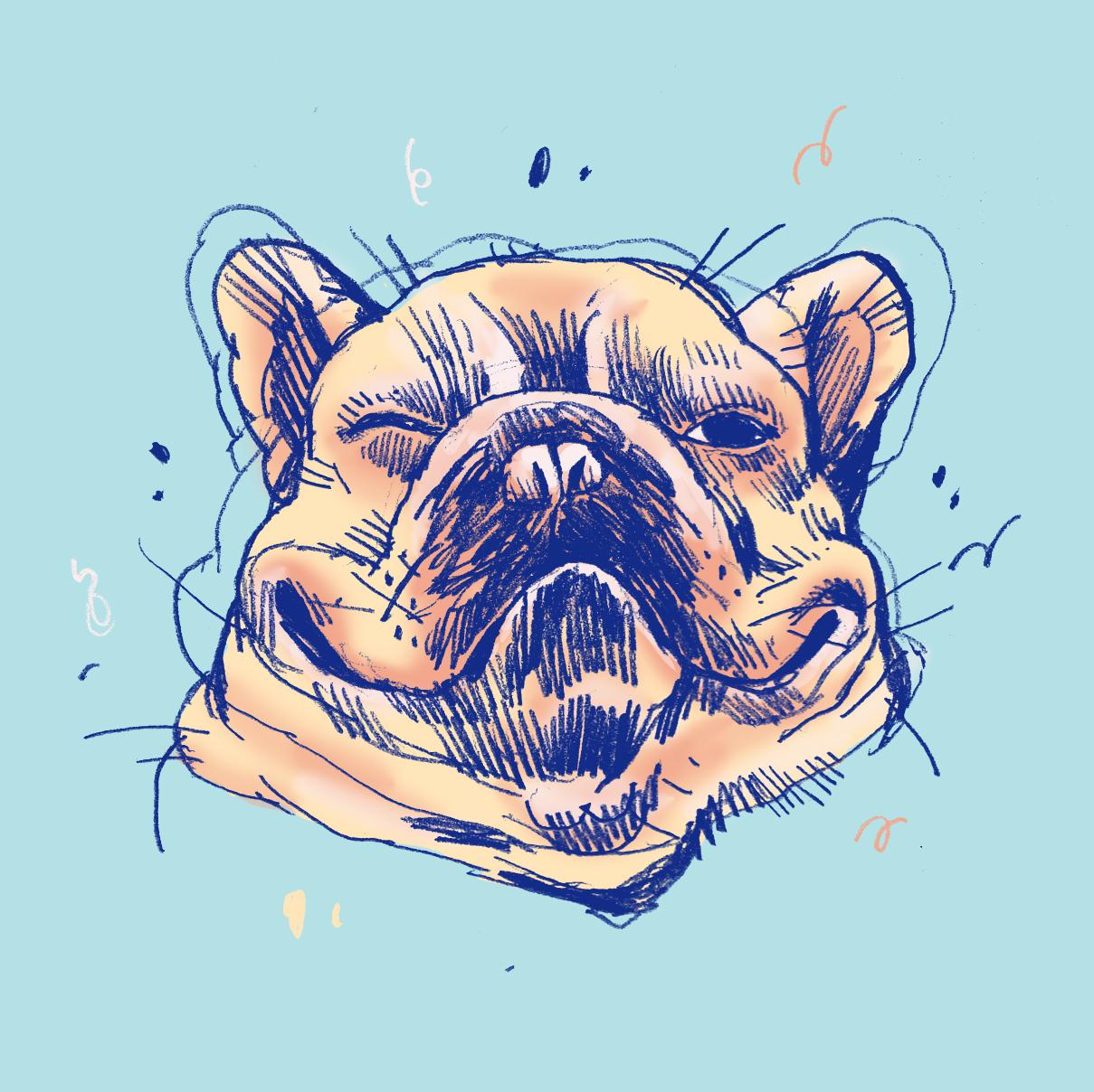 DogsofInstagram