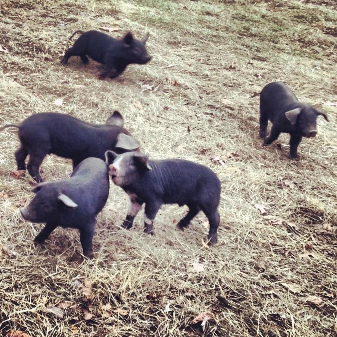 piggy playtime.JPG