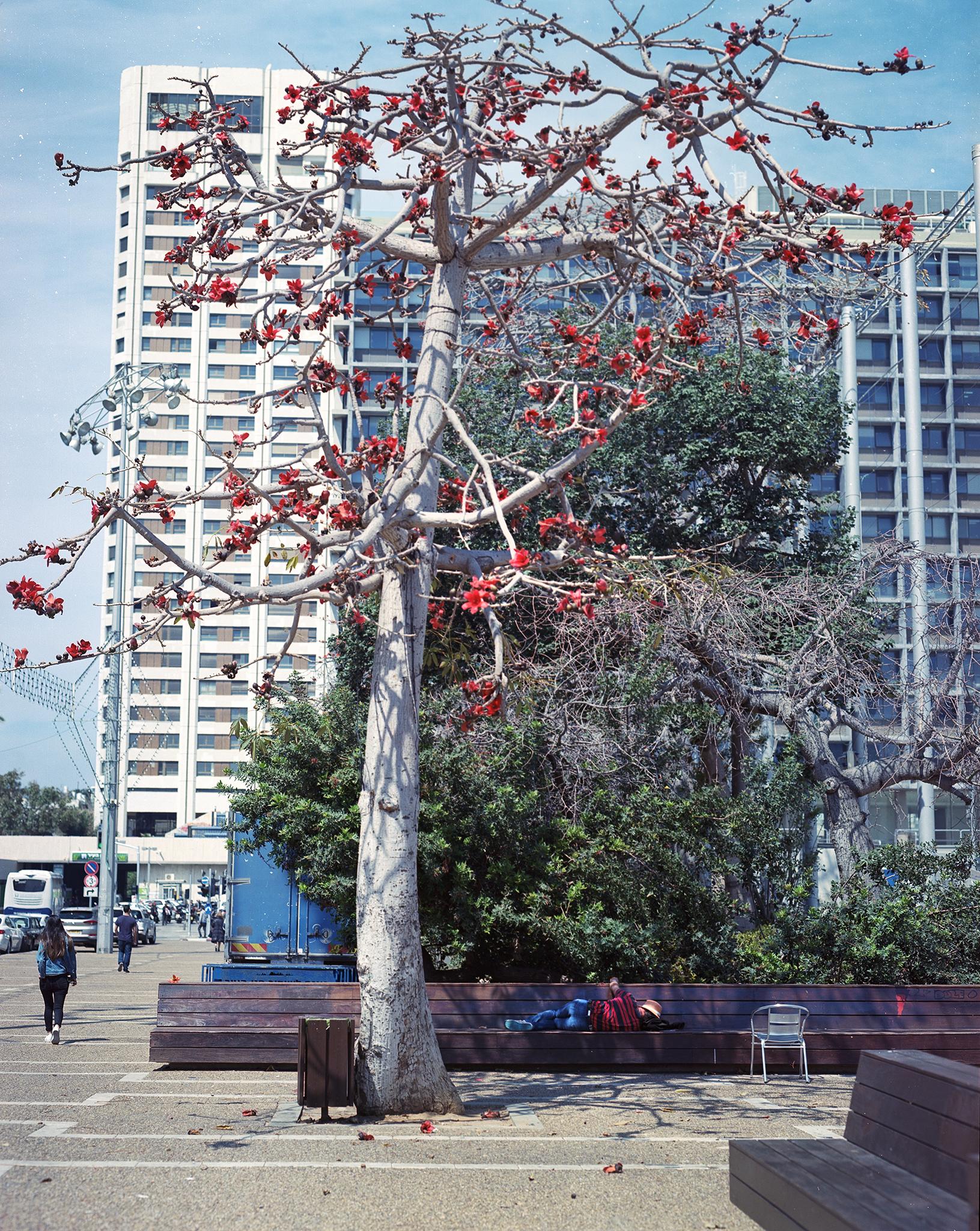 red tree man asleep in red copy.jpg