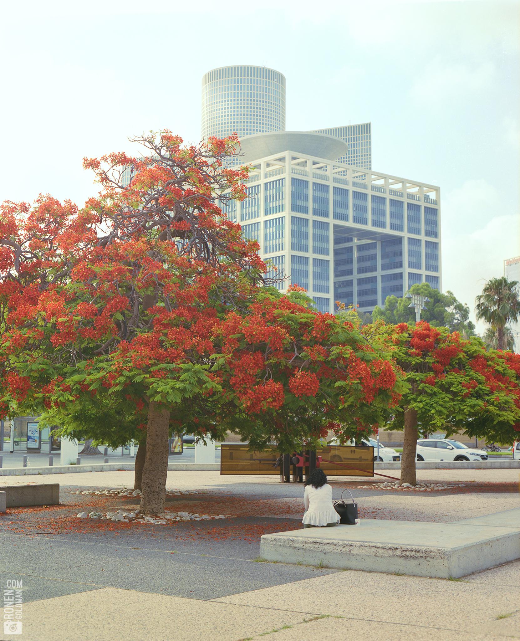 tokyo Tel Aviv.jpg