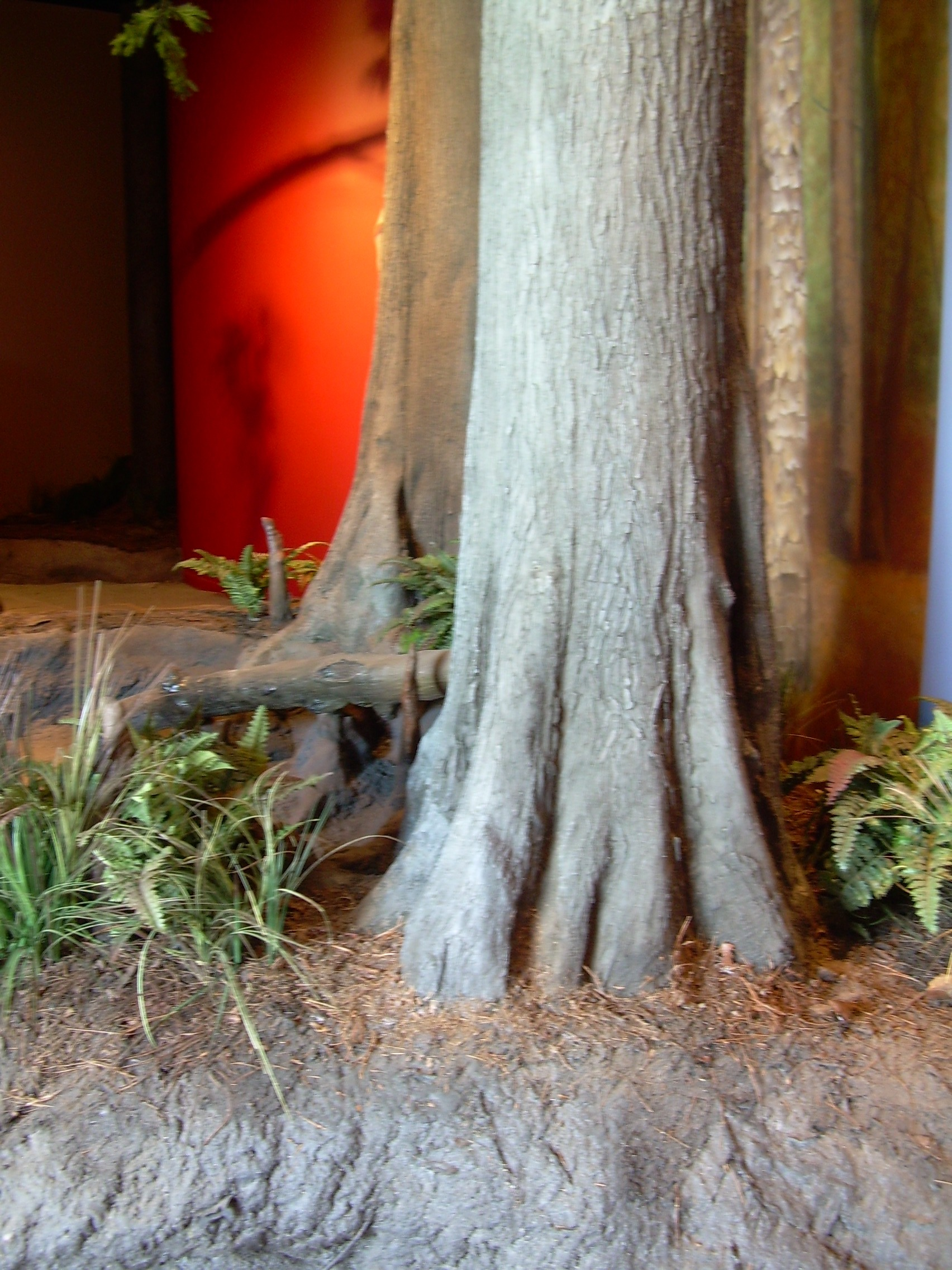 w.tree repros.cypress base.JPG