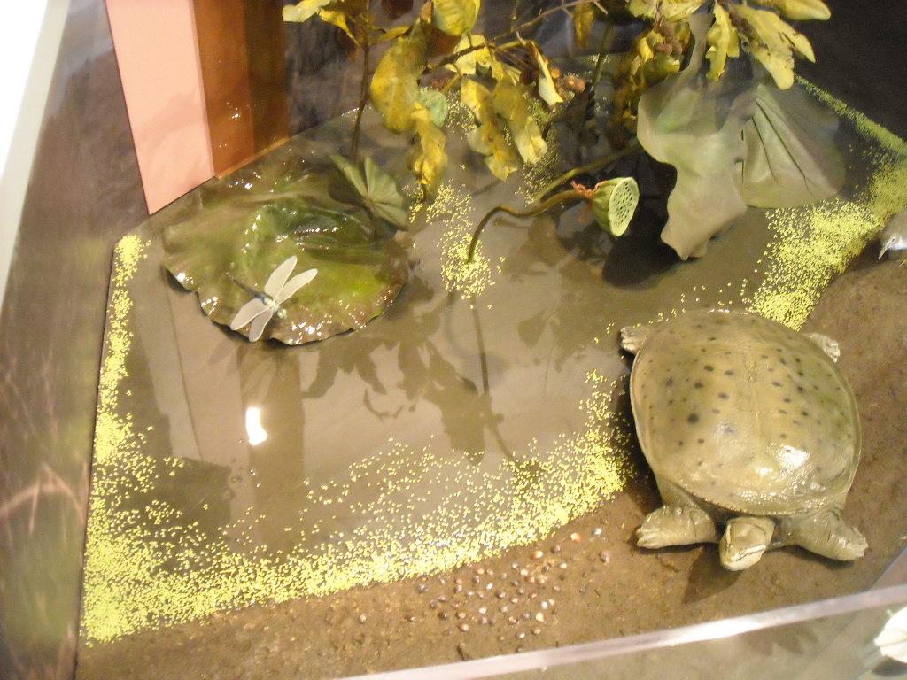 w.dioramas.swamp.JPG