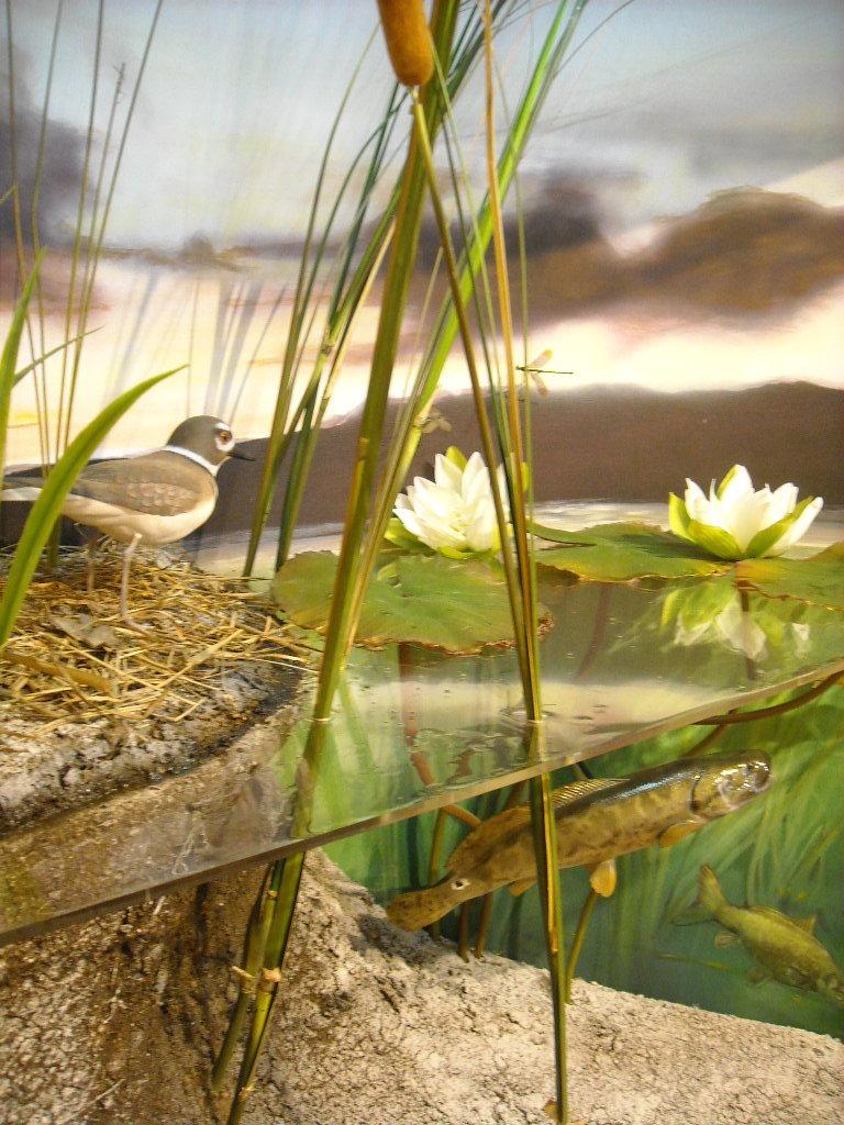 w.pg.aquatic environments.florrisant.JPG