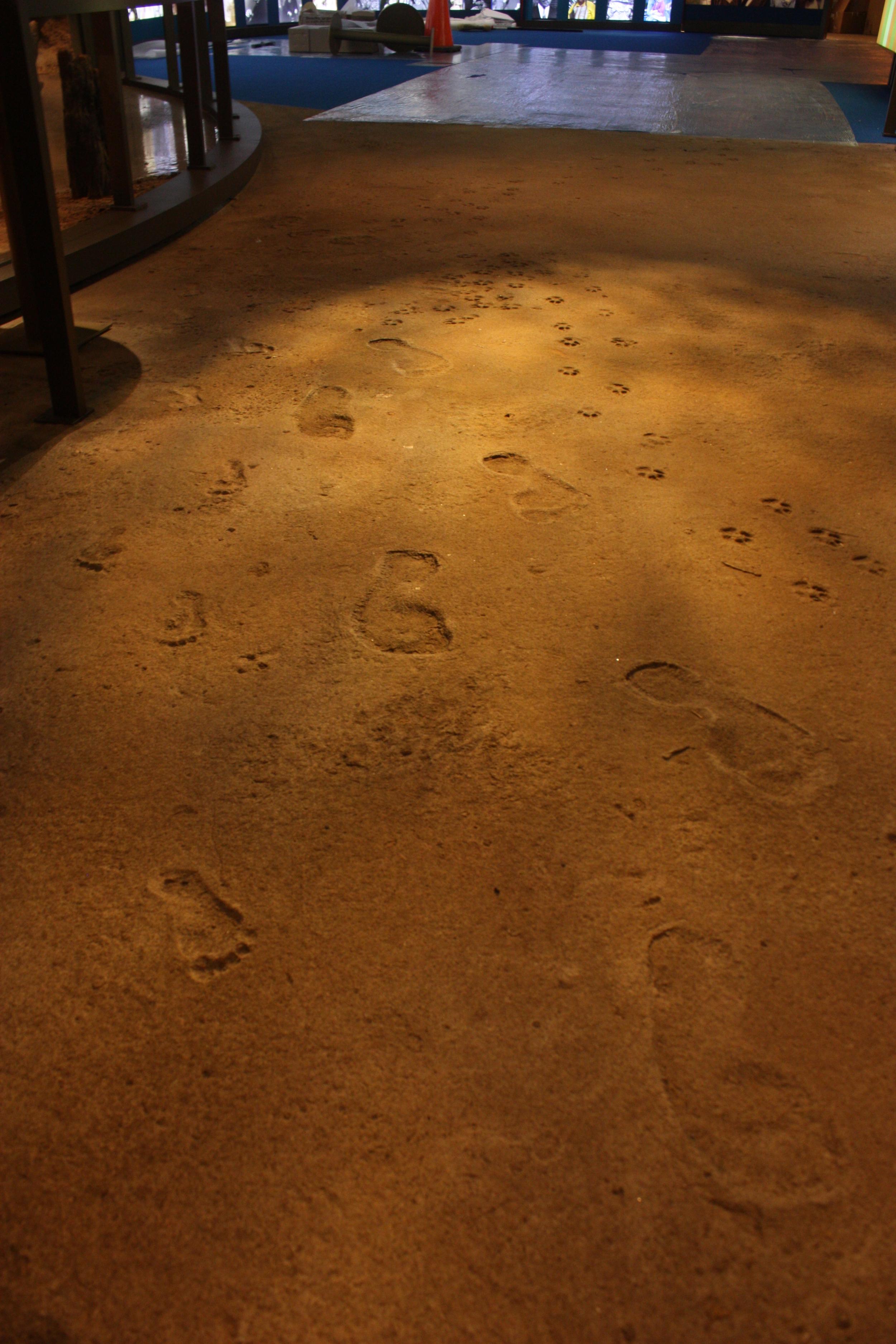 w.home.slide15.dirt footprints.JPG