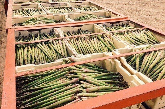 Asparagus - Cuts & Tips, Puree