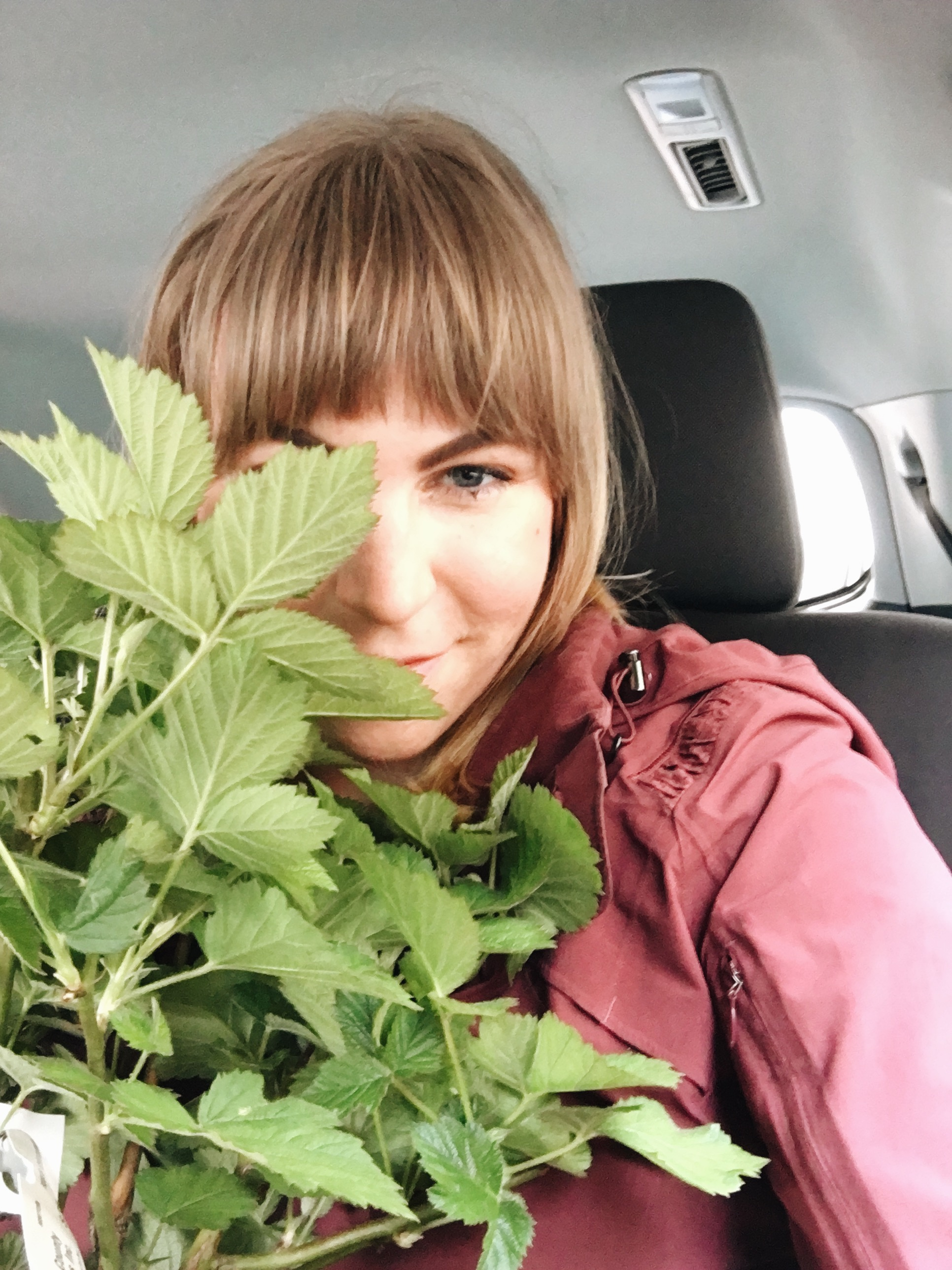 In the back of the Uber on the way home from the nursery (supporting one lilac tree, trying not to step on 7 herb pots, with a dirt covered blackberry bush in my lap, and one Atlas barking for attention)