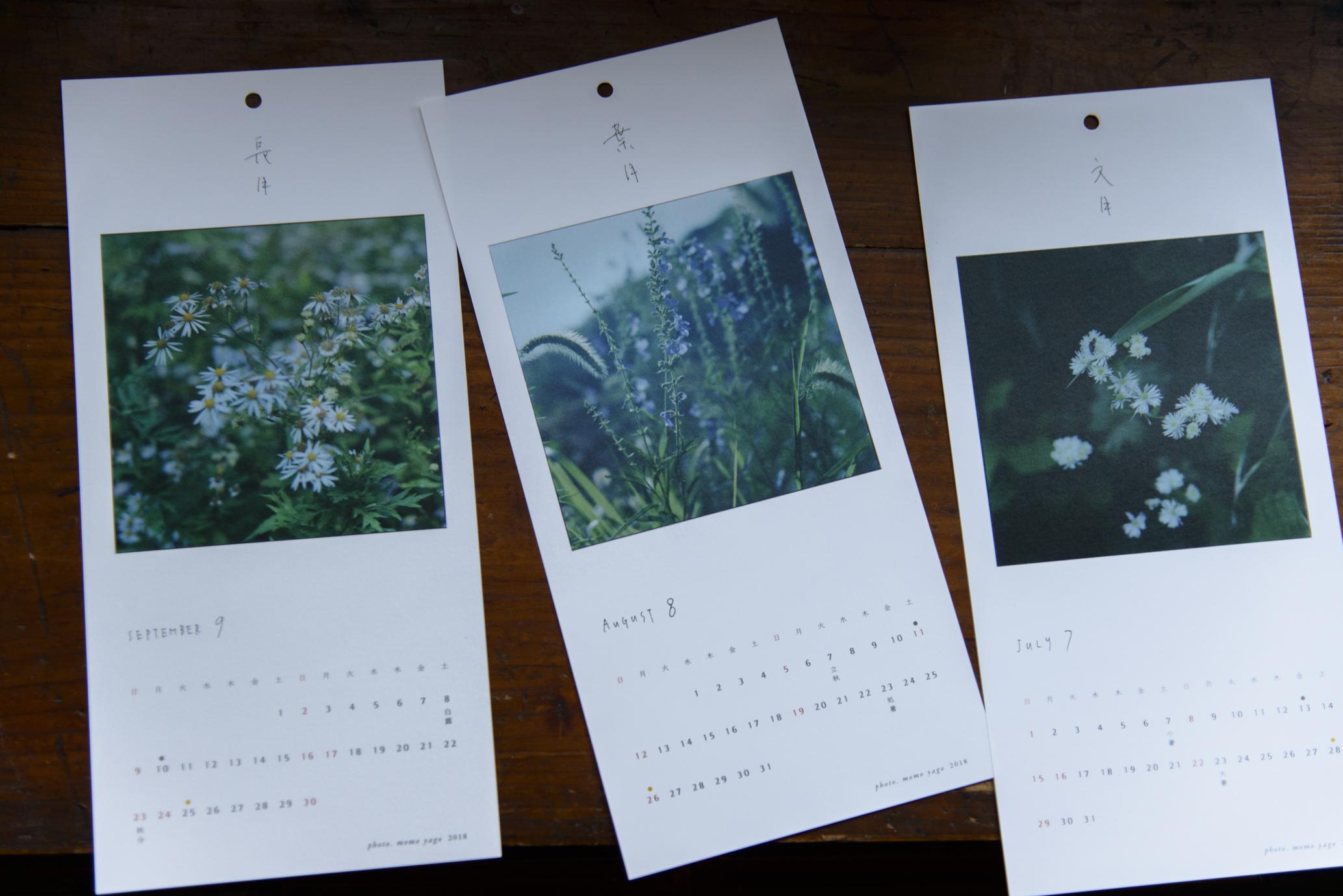 文月 / 七月 カラマツソウ、葉月 / 八月 ブルーセージ、長月 / 九月 ノギク