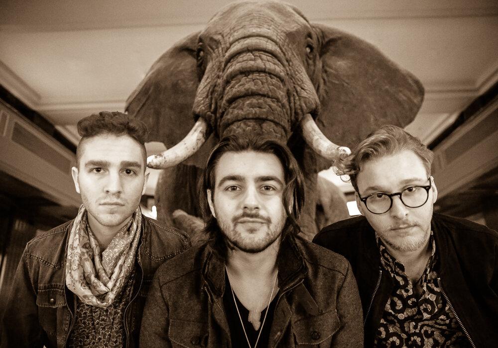 Elephant pic 2.jpg
