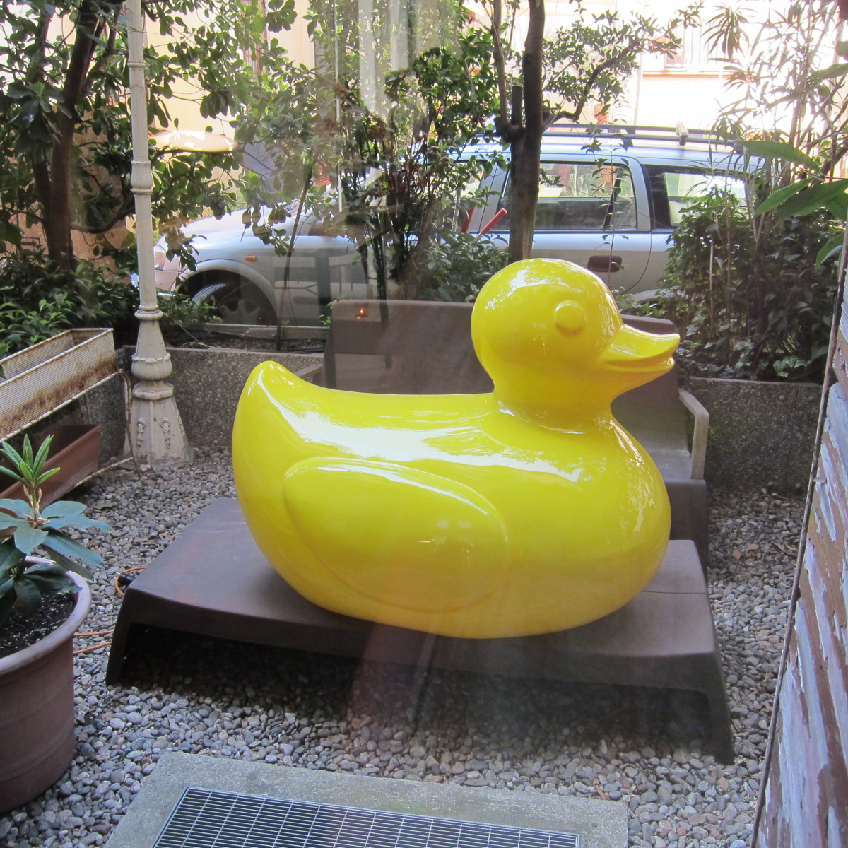 milan duck cilla.jpg