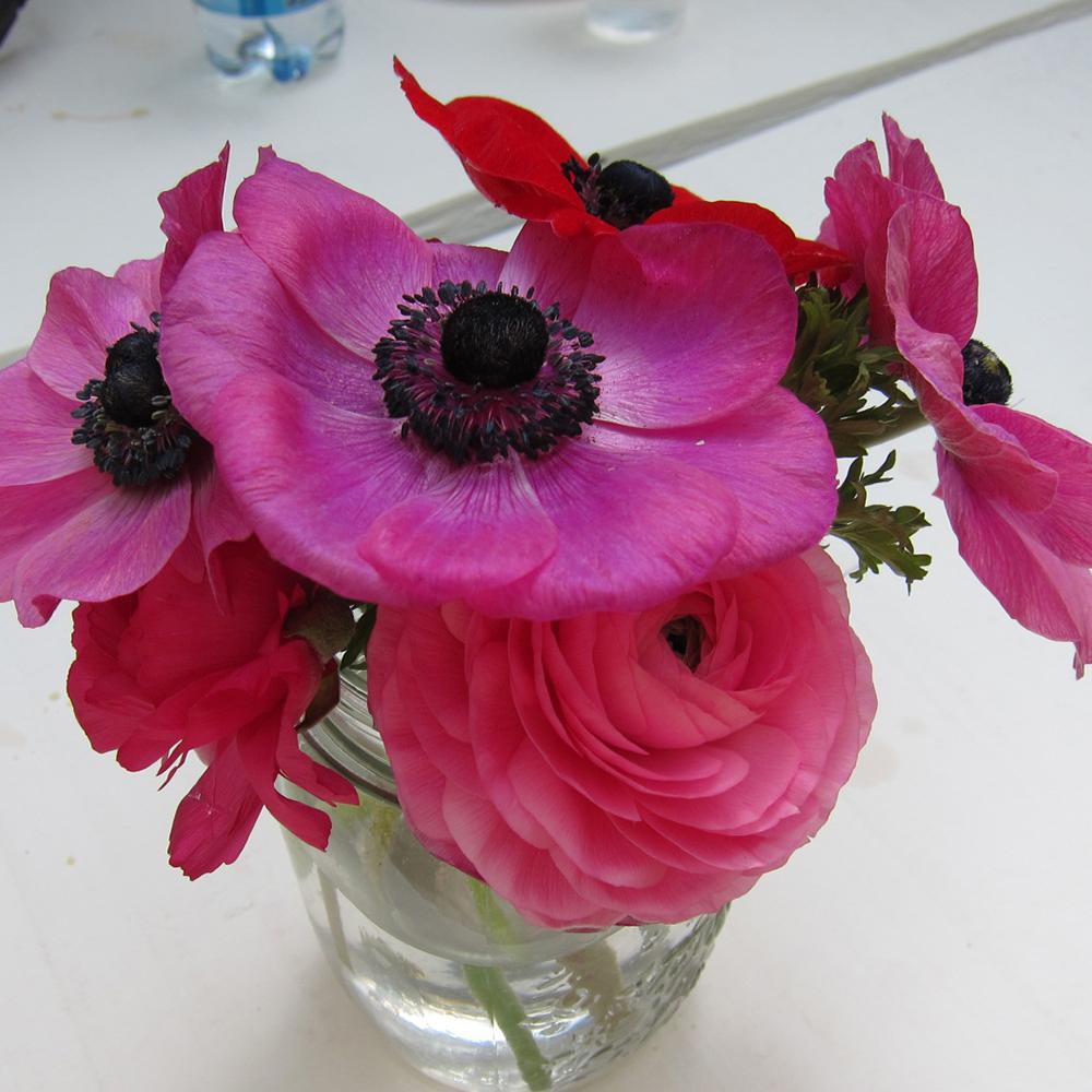 web anemone cilla.jpg