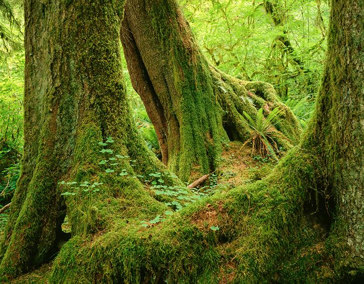JDOlympicNationalParkRainforest.jpg