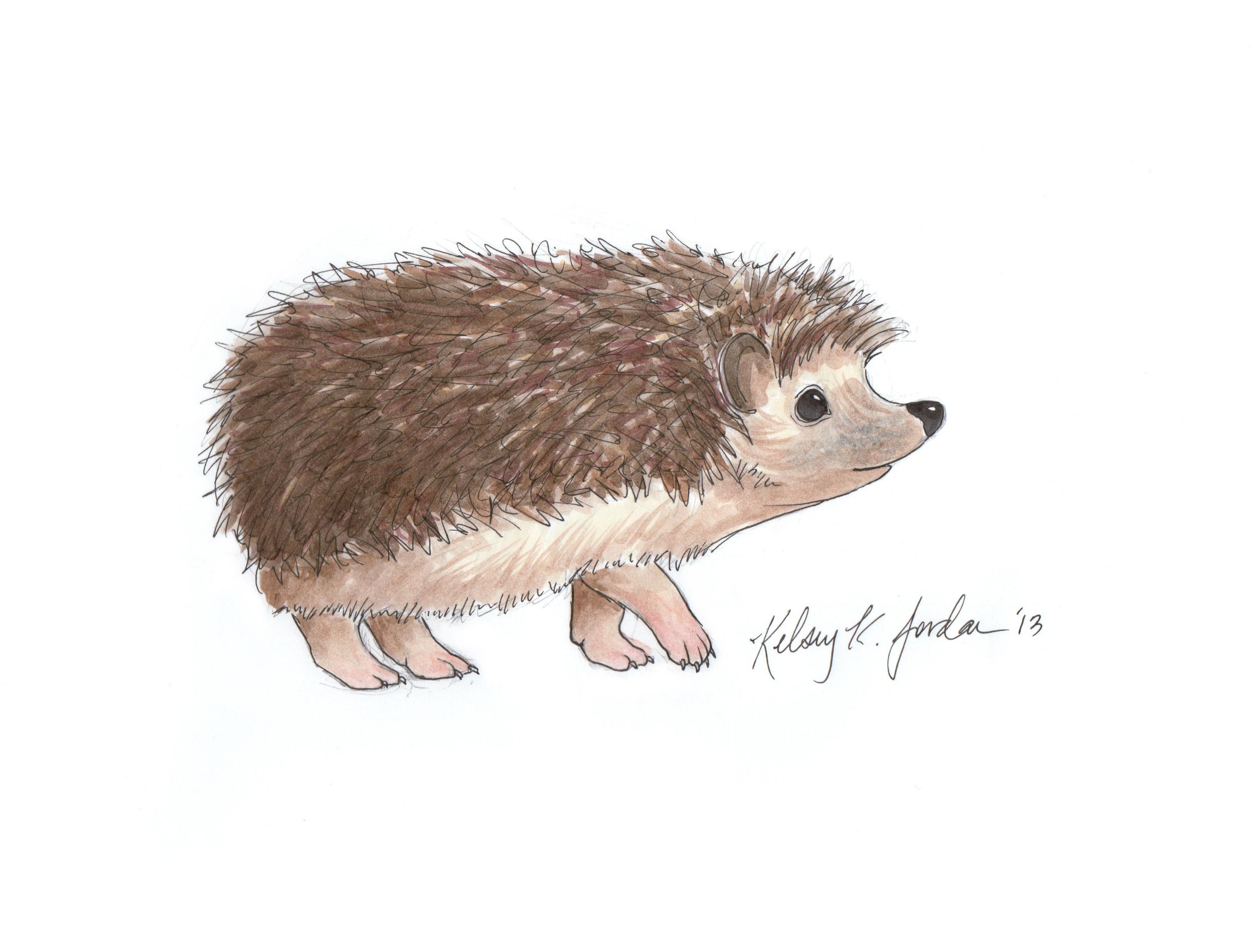 HedgehogSideEdit.jpg