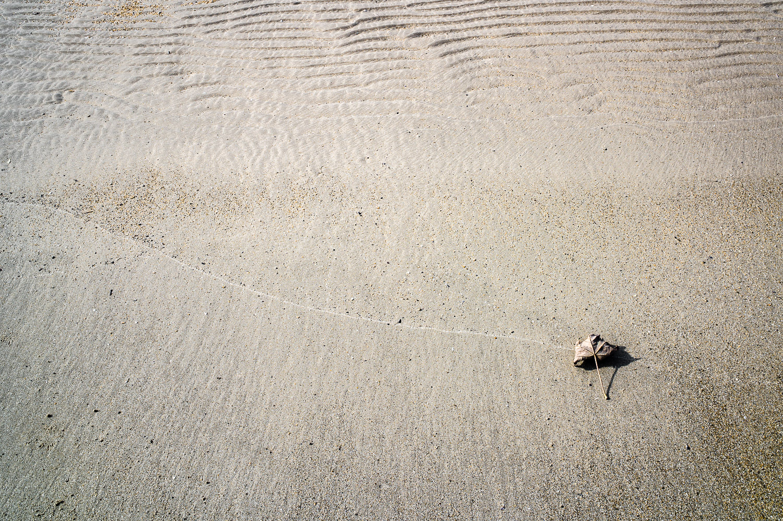 leaf-on-tide-mark-(1-of-1).jpg