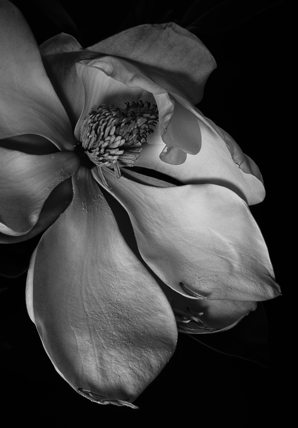 website magnolia (1 of 1).jpg