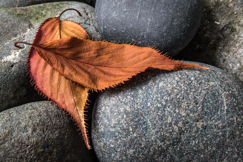 leaves-on-rocks-(1-of-1).jpg