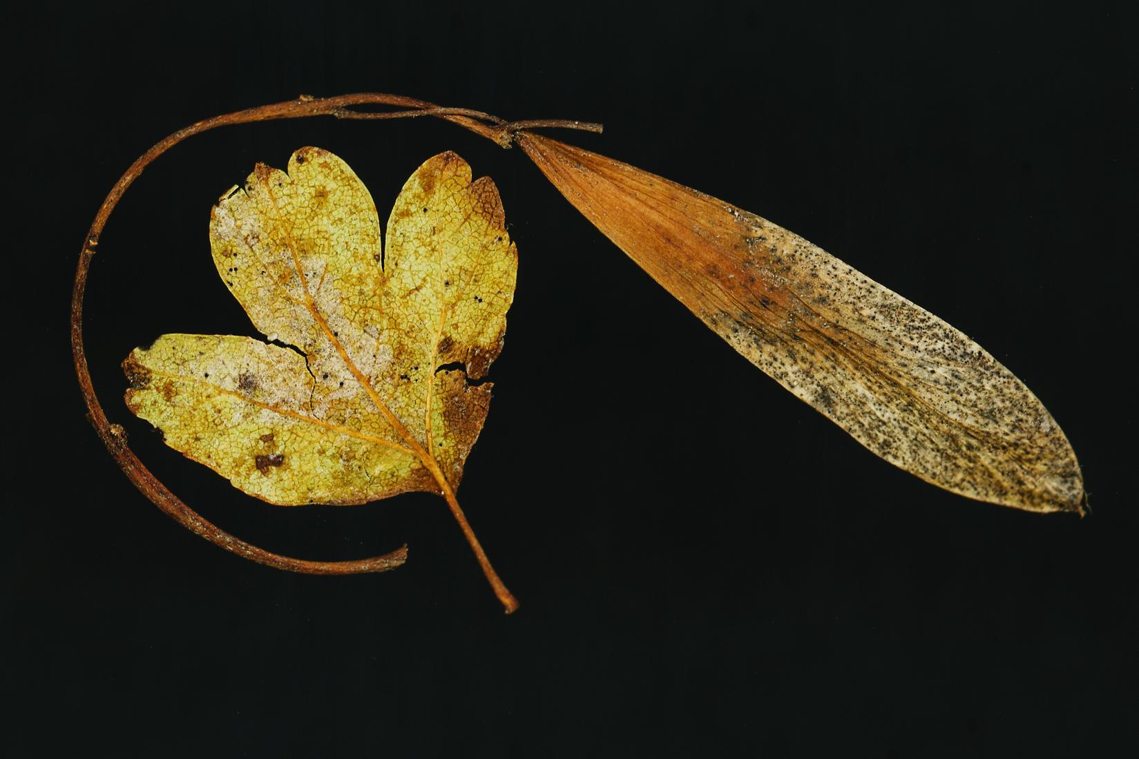 more leaves.jpg