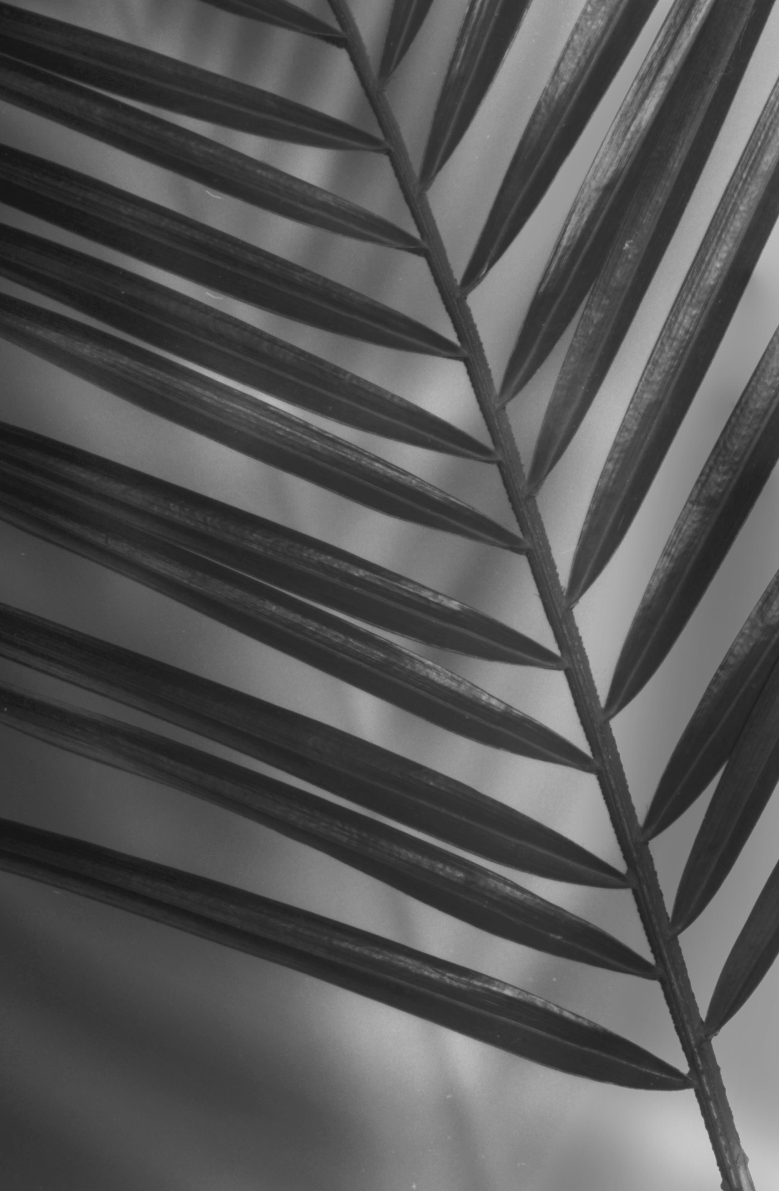palm pattern.jpg
