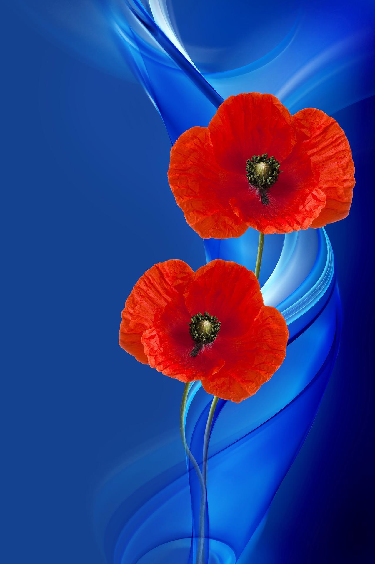 poppy-2920313_1920.jpg
