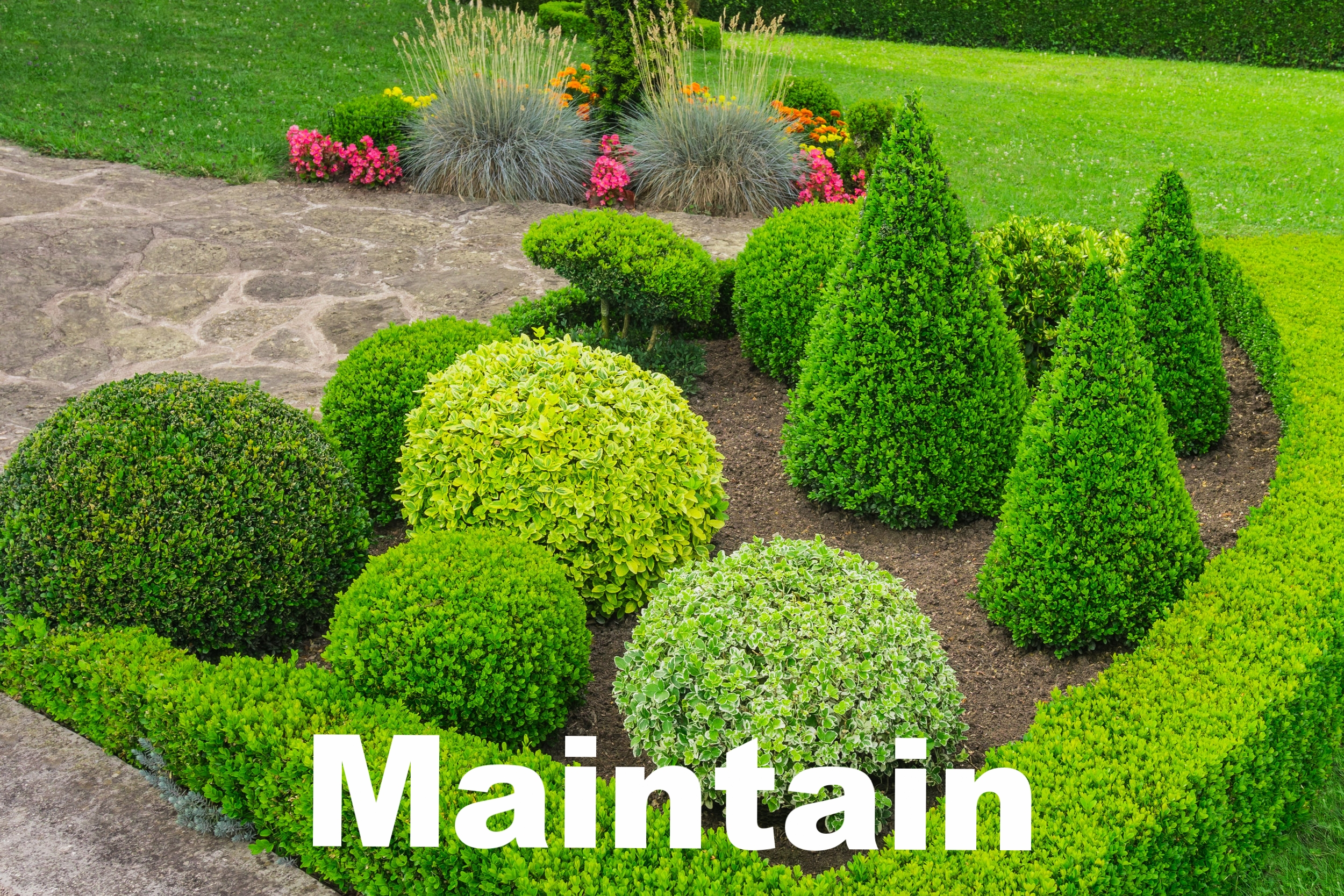 manacured plantings pruning mulch brown green topiary yard.jpeg