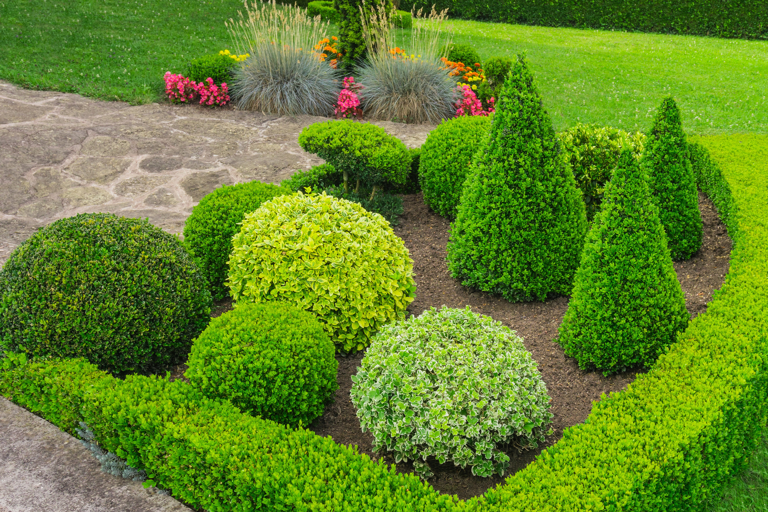 plant design defined clean garden evergreen boxwood color