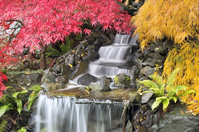 waterfall landscape design Japanese garden maple zen