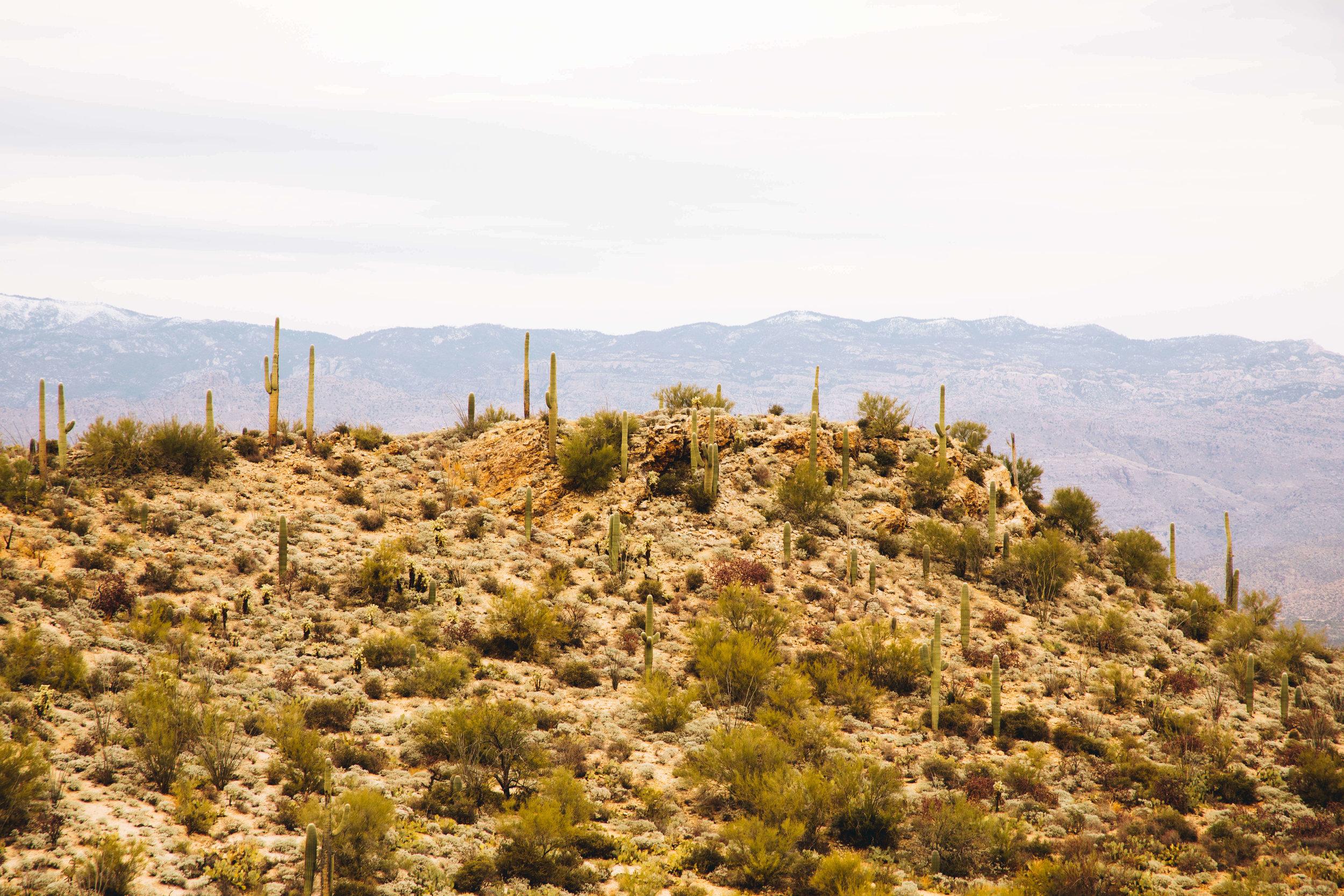 arizona-new-year-39.jpg