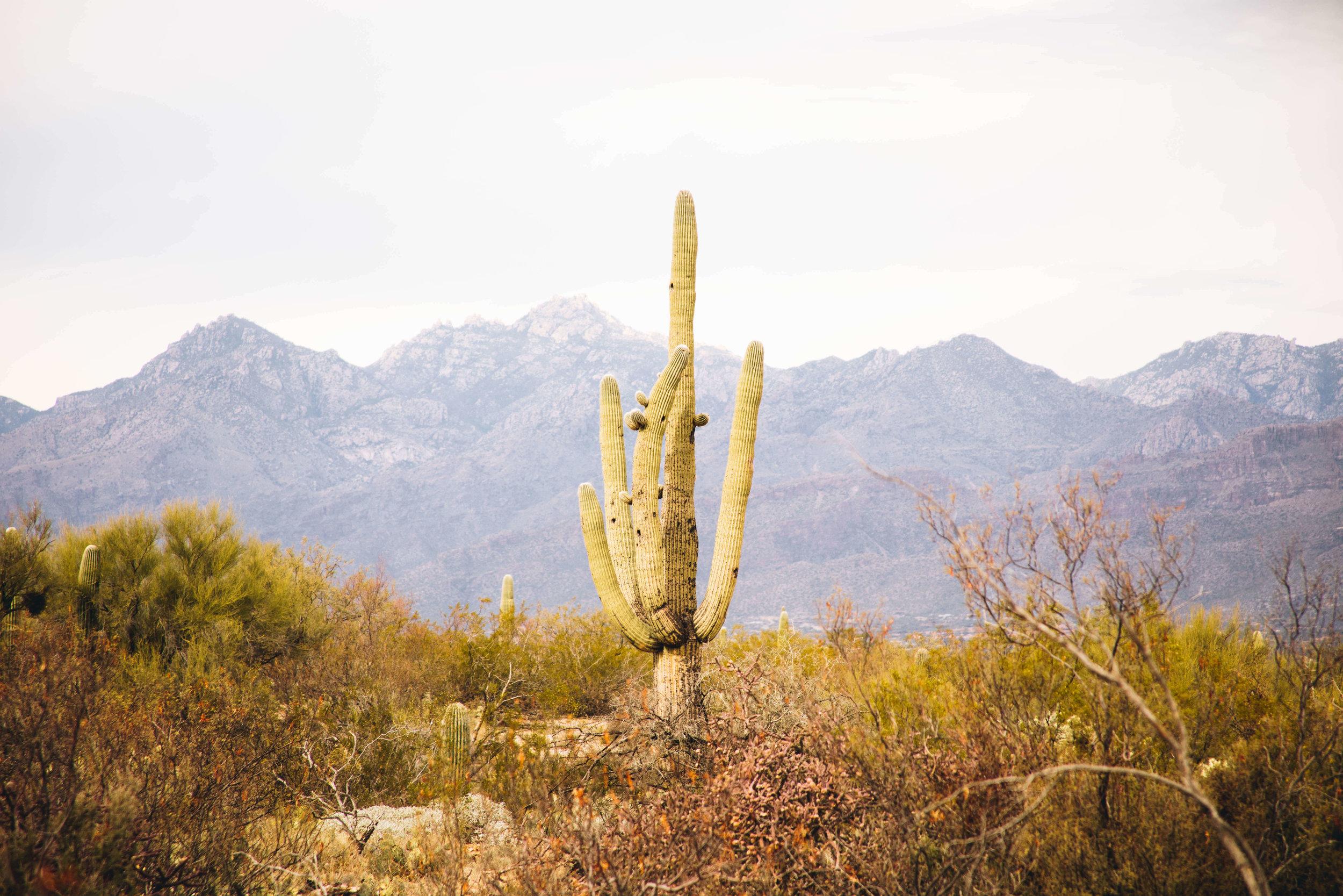 arizona-new-year-29.jpg