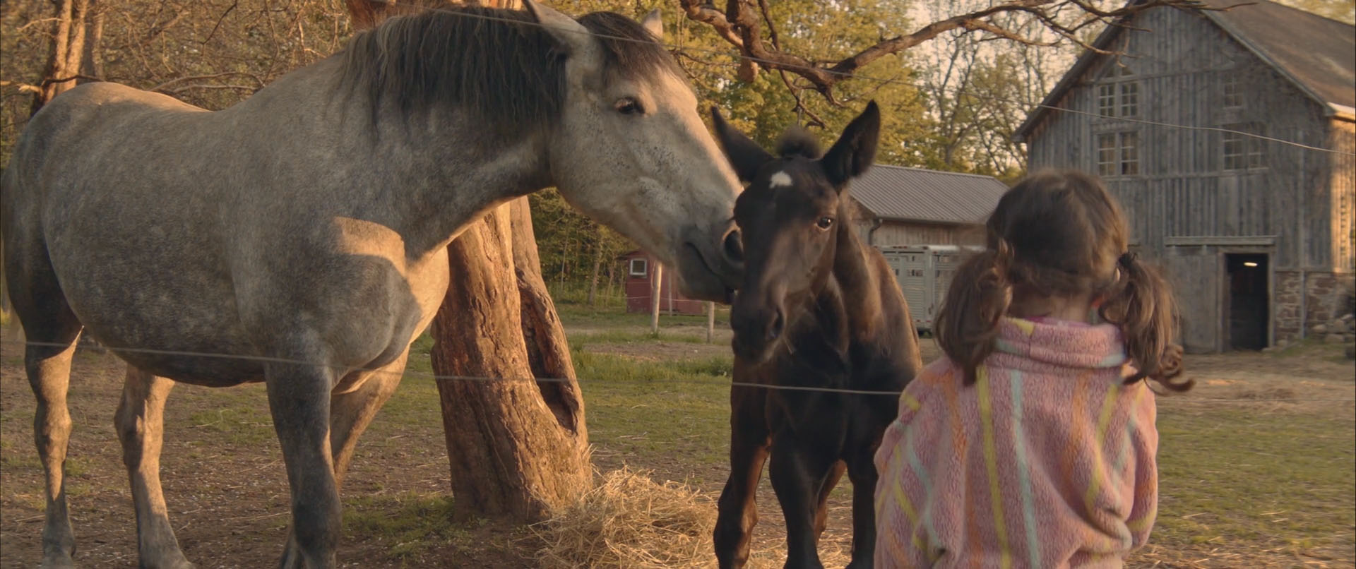 In this scene from The Wish Horse, Kitty visits the magical foal, Poppy, and Poppy's mother.