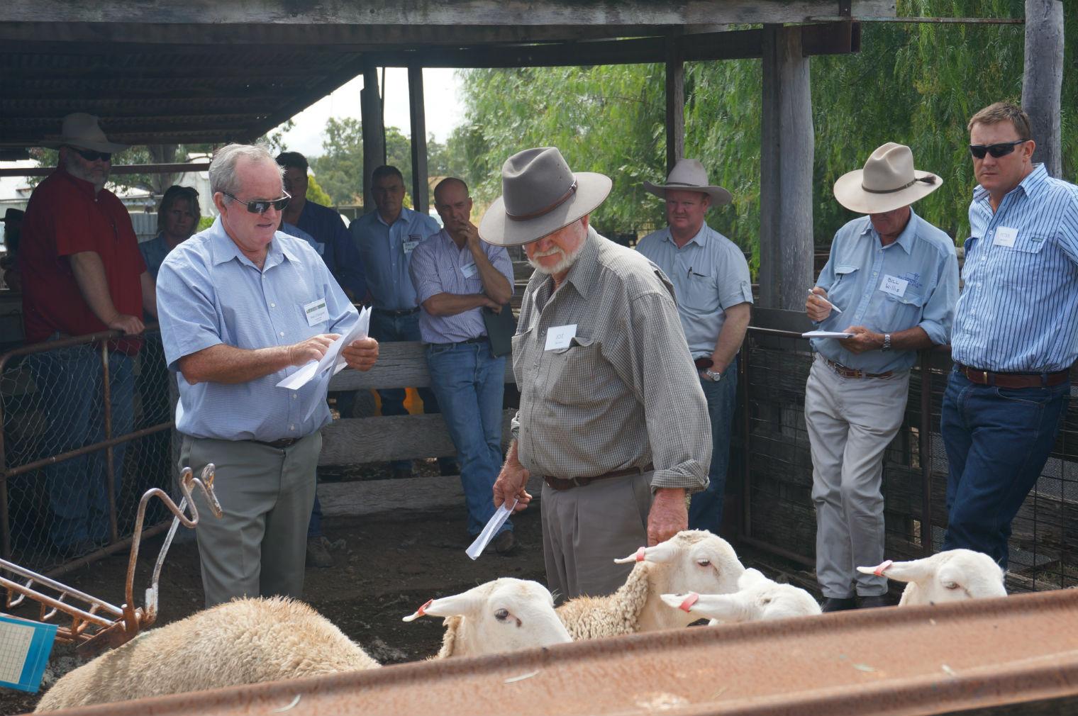 2015.4.1-Lamb-Workshop-Artunga-3-rs.jpg