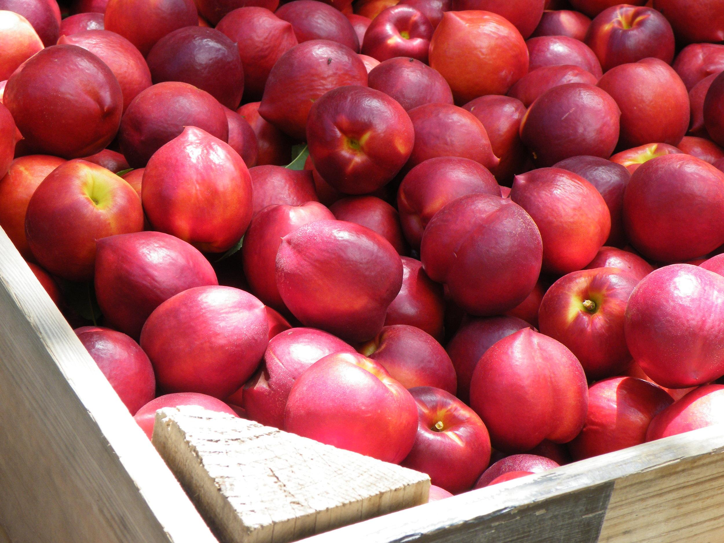 RH 2009 Nov fruit.jpg