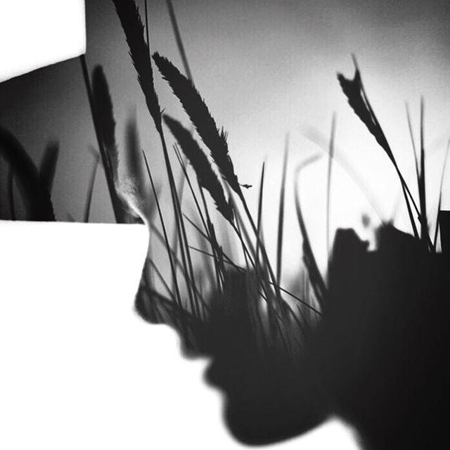 Fall. #paintedlight #blackandwhite #instablackandwhite #blackandwhitephotography