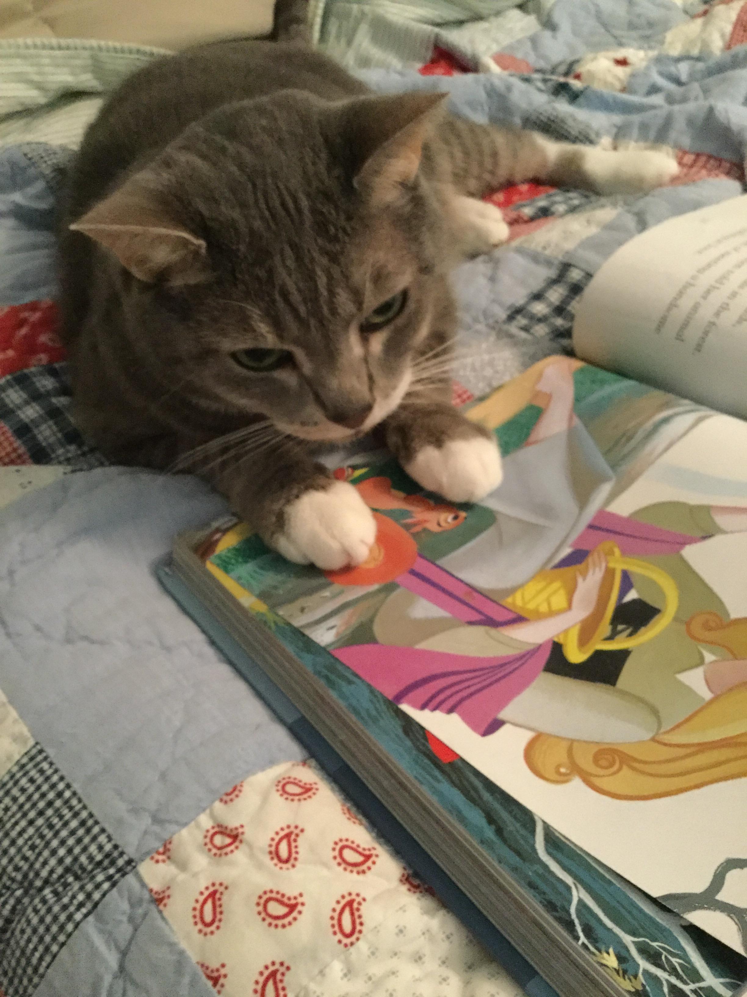 Koly Cat.JPG