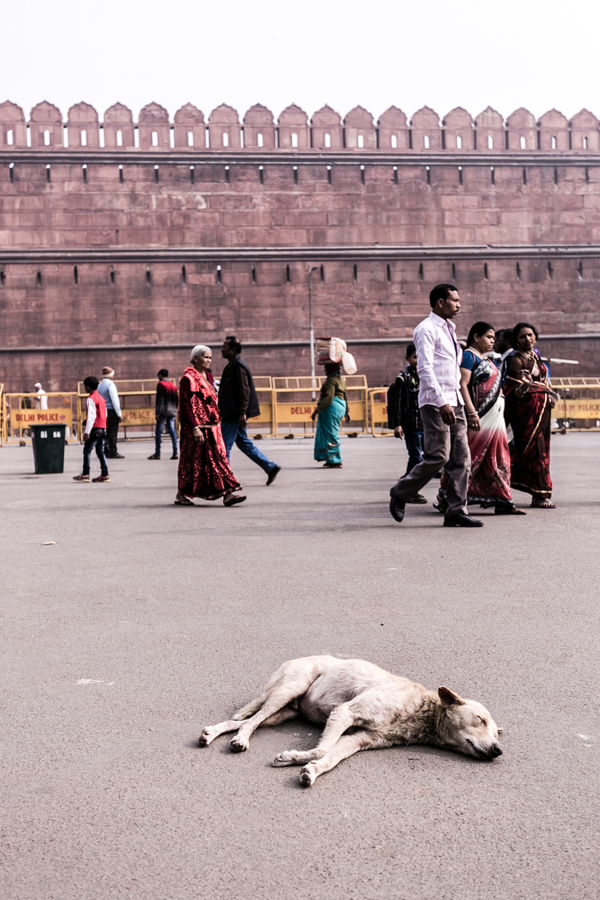 A dog lazes by the Lahori Gate gate, which today is the primary entrance to the fort.