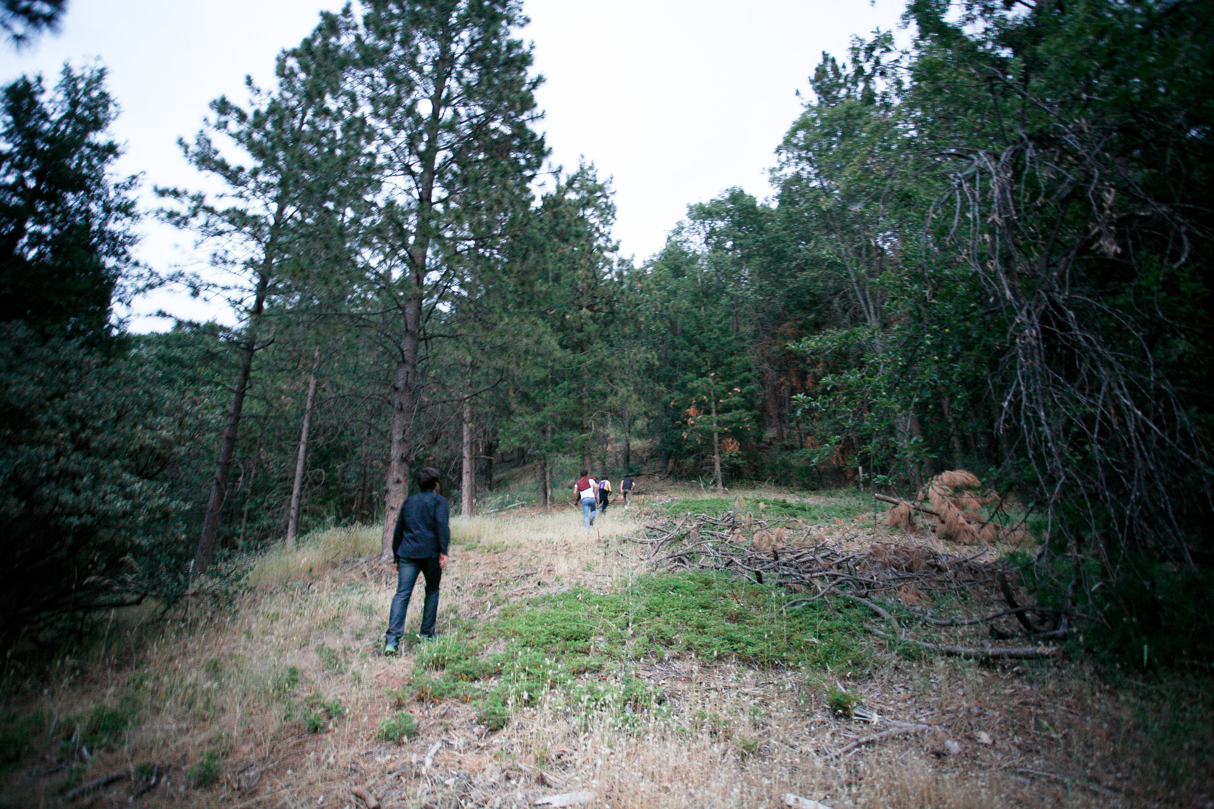 The conifers in the Kings National Park and surrounding area are dying at unprecedented rates due to a lack of water, trees are unable to produce enough sap to ward off parasites.