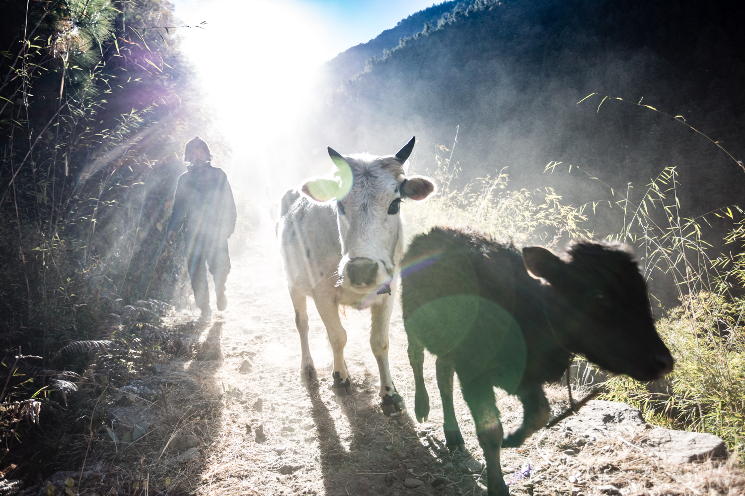 The narrow mountain paths must be shared with locals going about their business of transporting goods and herding livestock.