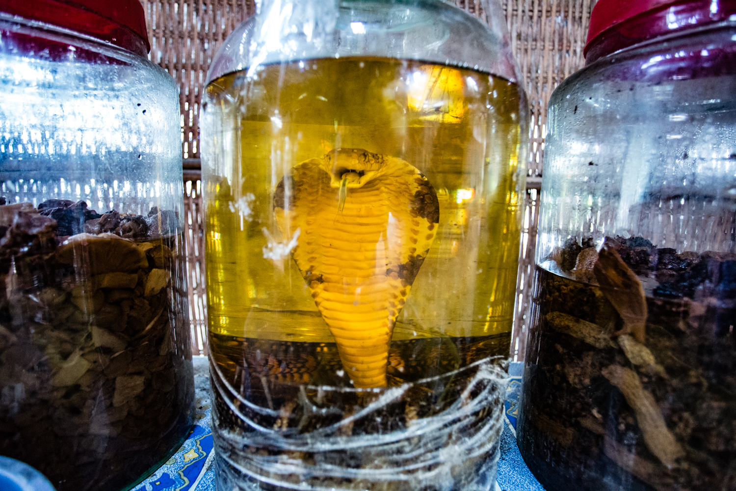 Snake wine is popular throughout Vietnam and  is believed to have medicinal properties.