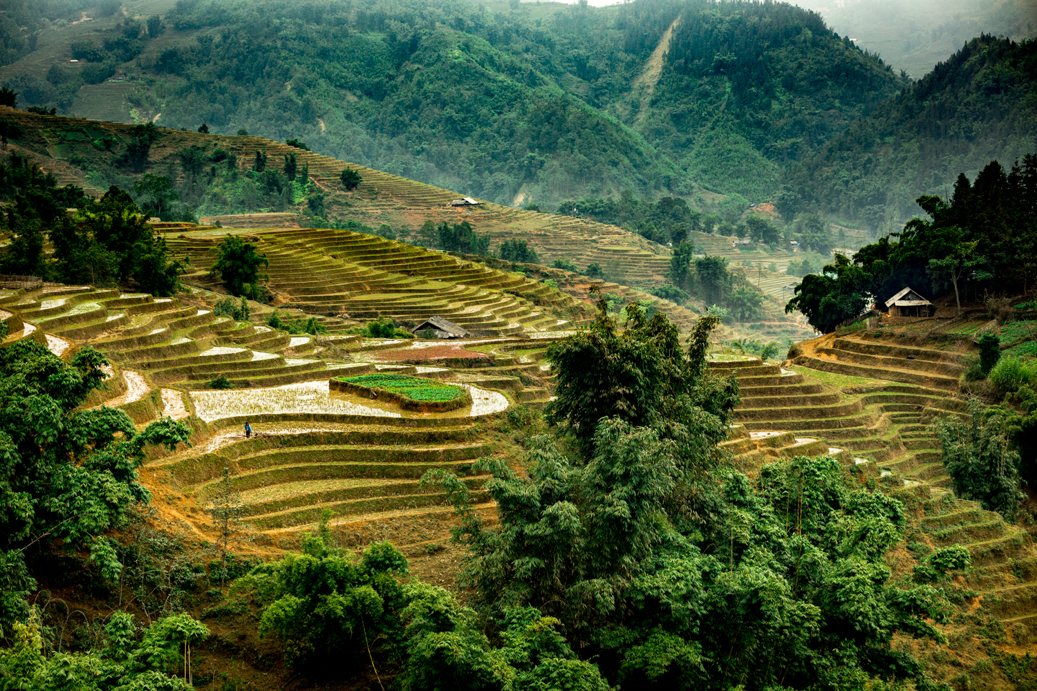 Rice patties near Sapa.