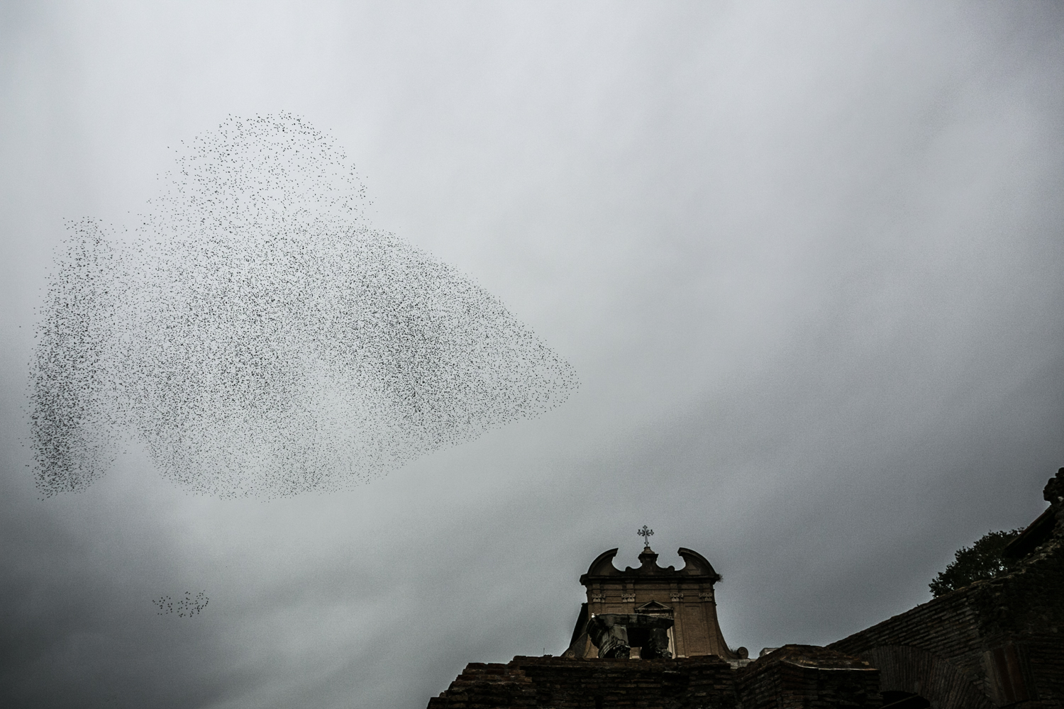 Flock of starlings flying over the Forum in Rome, Italy.