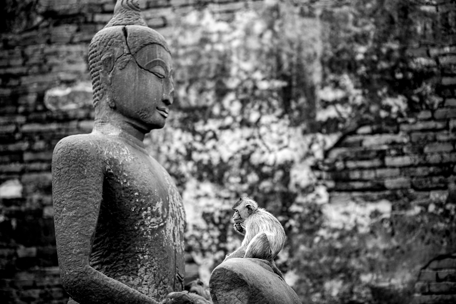 A contemplative monkey at the Prang Sam Yot Temple in Lopburi, Thailand. Lopburi is home to hundreds of rhesus and macaque monkeys.